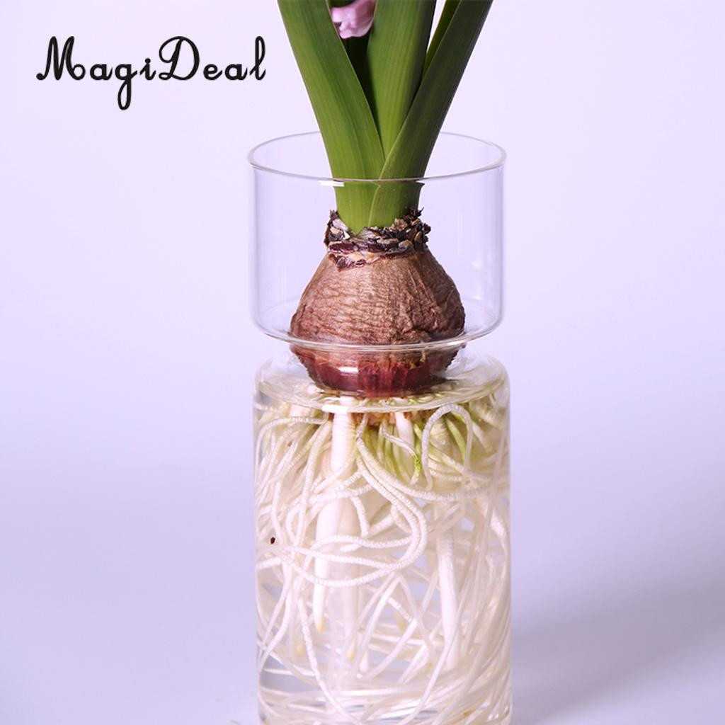 20 Inch Tall Glass Vases Of Magideal Clear Hyacinth Glass Vase Flower Planter Pot Diy Terrarium with Regard to Magideal Clear Hyacinth Glass Vase Flower Planter Pot Diy Terrarium Container Decor Art Gift In Vases From Home Garden On Aliexpress Com Alibaba Group