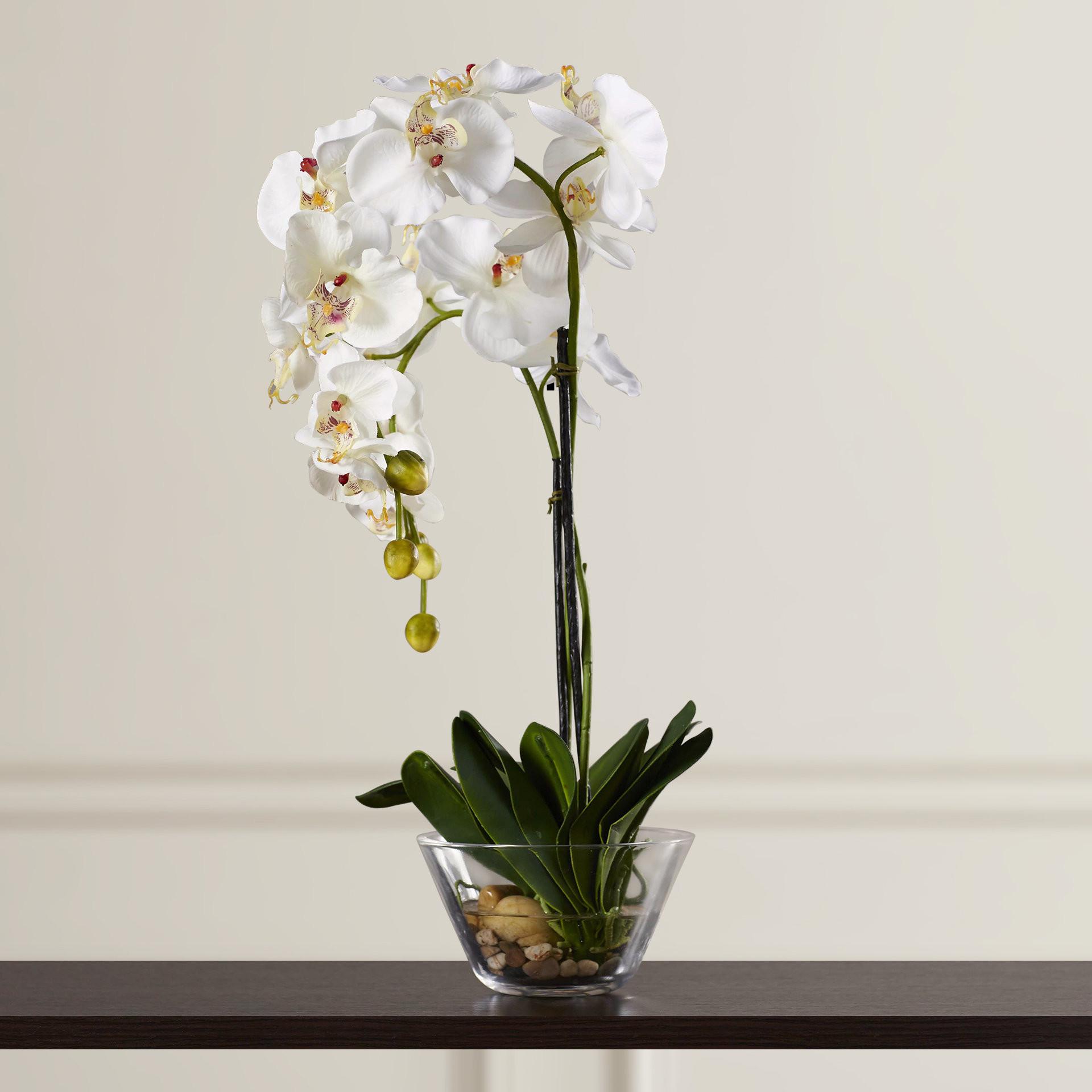 22 Elegant 4 Glass Cube Vase 2021 free download 4 glass cube vase of three posts phalaenopsis silk white orchid in glass vase reviews for three posts phalaenopsis silk white orchid in glass vase reviews wayfair