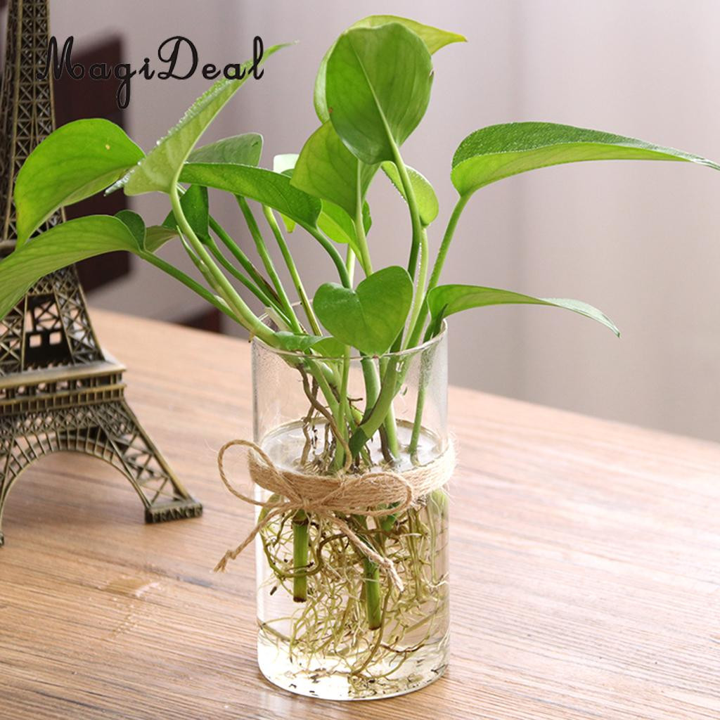 9 inch glass vase of magideal hydroponic plants glass flower vase decorative plant pot intended for magideal hydroponic plants glass vase flower vase decorative plant pot home decor great gi