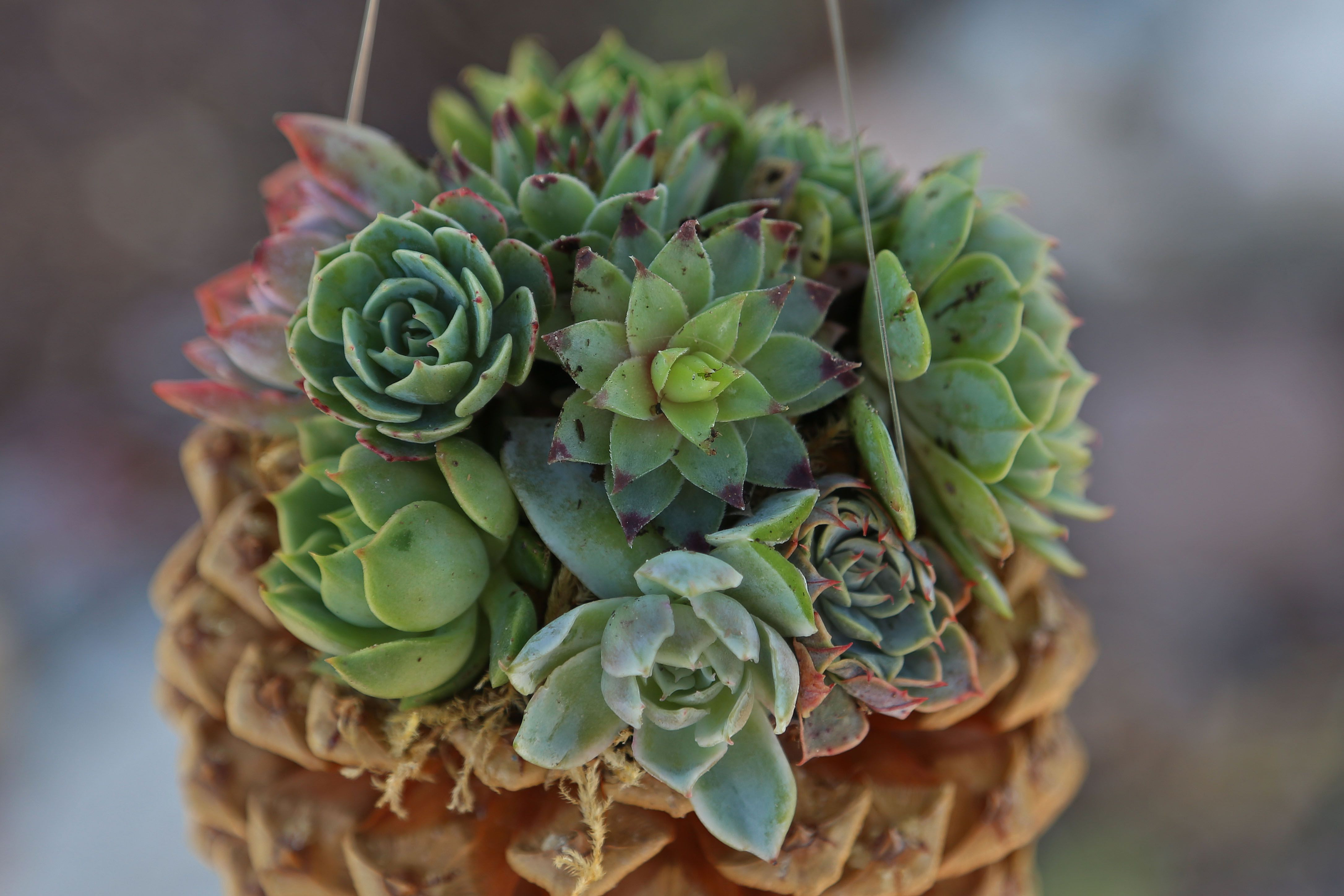 air plant vase ideas of 30 great tiny planters you can make yourself with 4 pine cone planter diy 58c98fe35f9b581d72c9f2a5