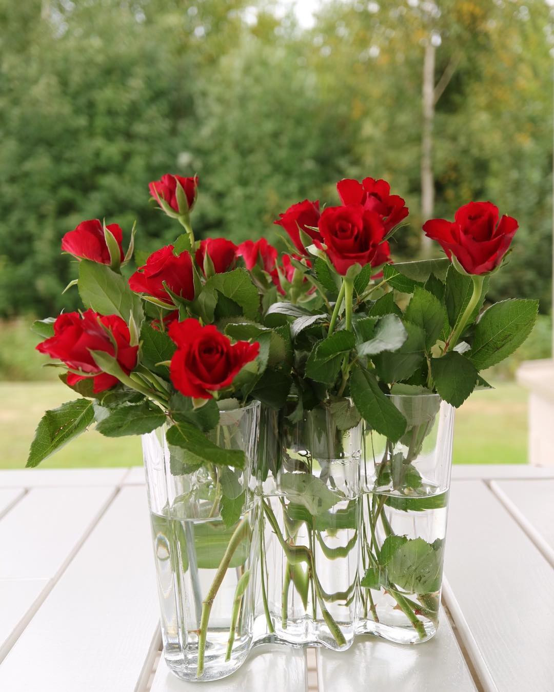 alvar aalto finlandia vase of savoyvase hash tags deskgram throughout kipasin kaupasta hakemassa na¤ma¤ tuulessa tanssivat ruusut dŸŒ¬ dŸŒdŸŒ¹dŸ˜ niin kaunis pa¤iva¤ ta¤na¤a