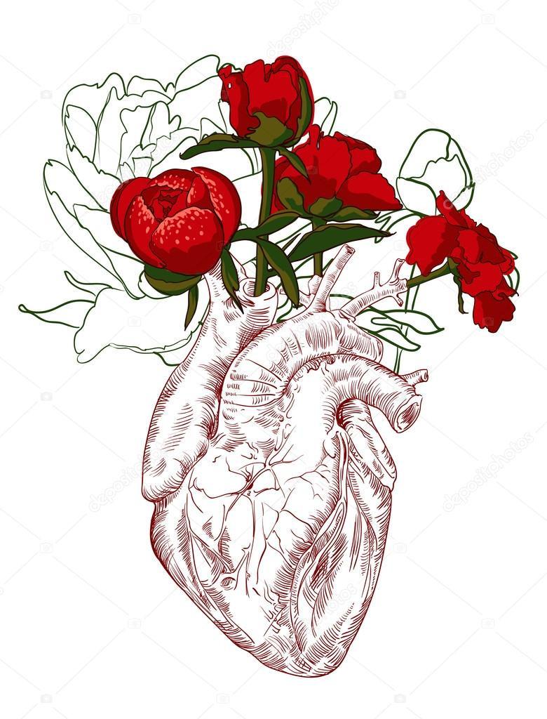 anatomical heart flower vase of kresba lidska srdce s kva›tinami stock vektor a mamziolzi 85224898 intended for kresba lidska srdce s kva›ty pozadam vektor vektor od mamziolzi