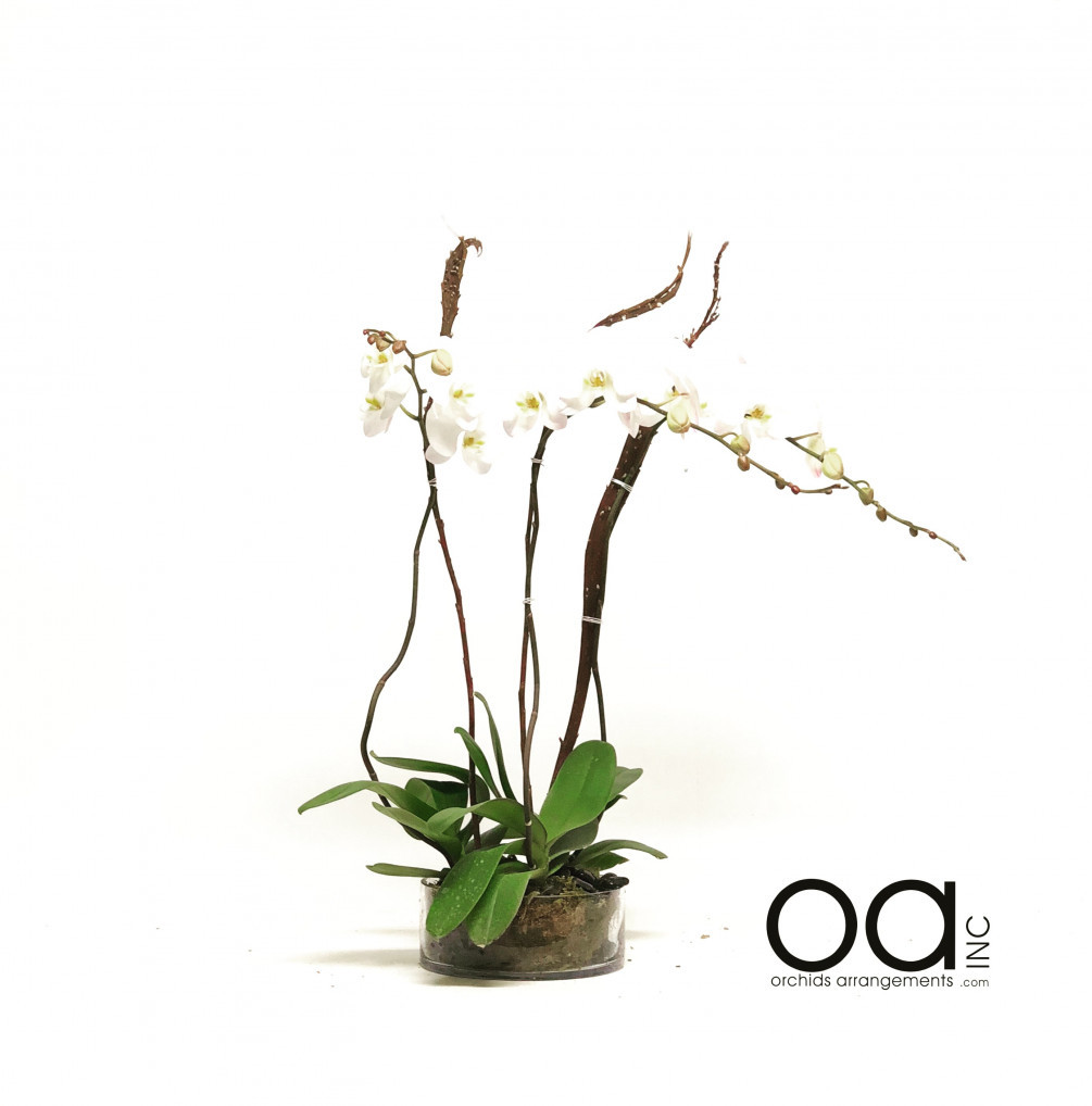 arranging flowers in a round vase of send 4 orchids arrangement round glass cylinder throughout 20180602030132 file 5b12b14c560ed