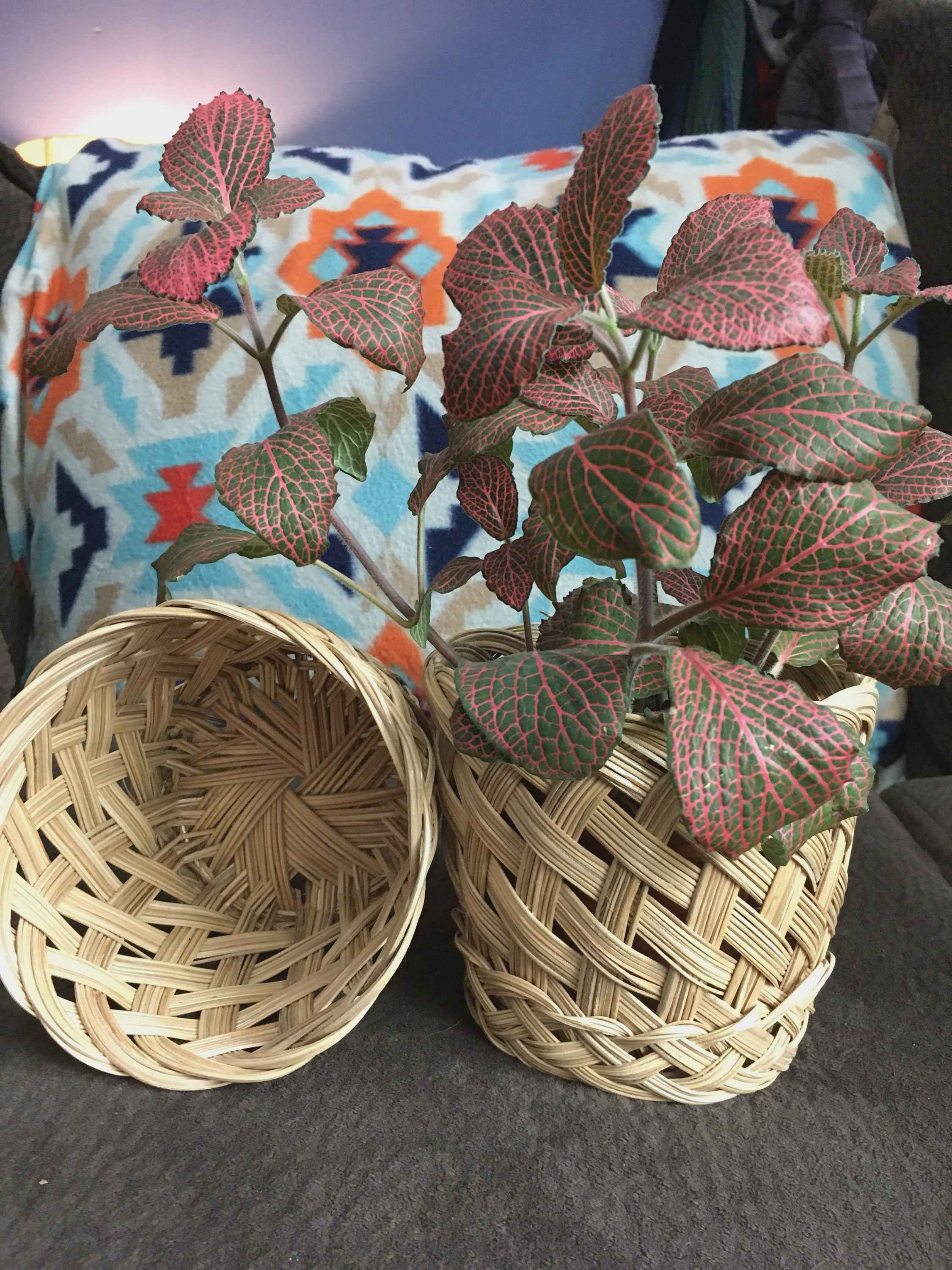 bamboo plant with elephant vase of beautiful basket plant pot plant directory pertaining to woven pair of planter baskets boho plant basket set of two by happyvintagestudio on etsy