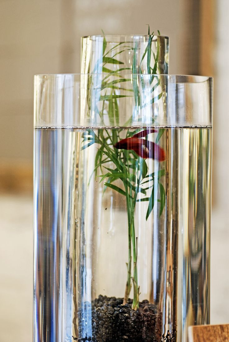 Beta Plant Vase Of 41 Best for the Home Images On Pinterest Home Ideas Landscaping Throughout Vase Beta Fish Tank the Vase Inside Of the Vase Allows for the Look Of