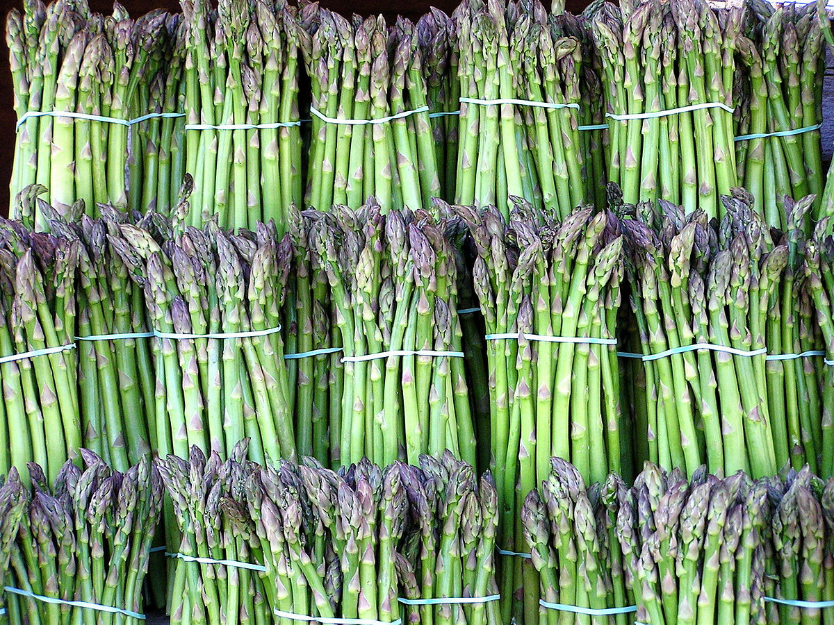 beta plant vase of asparagus wikipedia for 1200px asparagus image