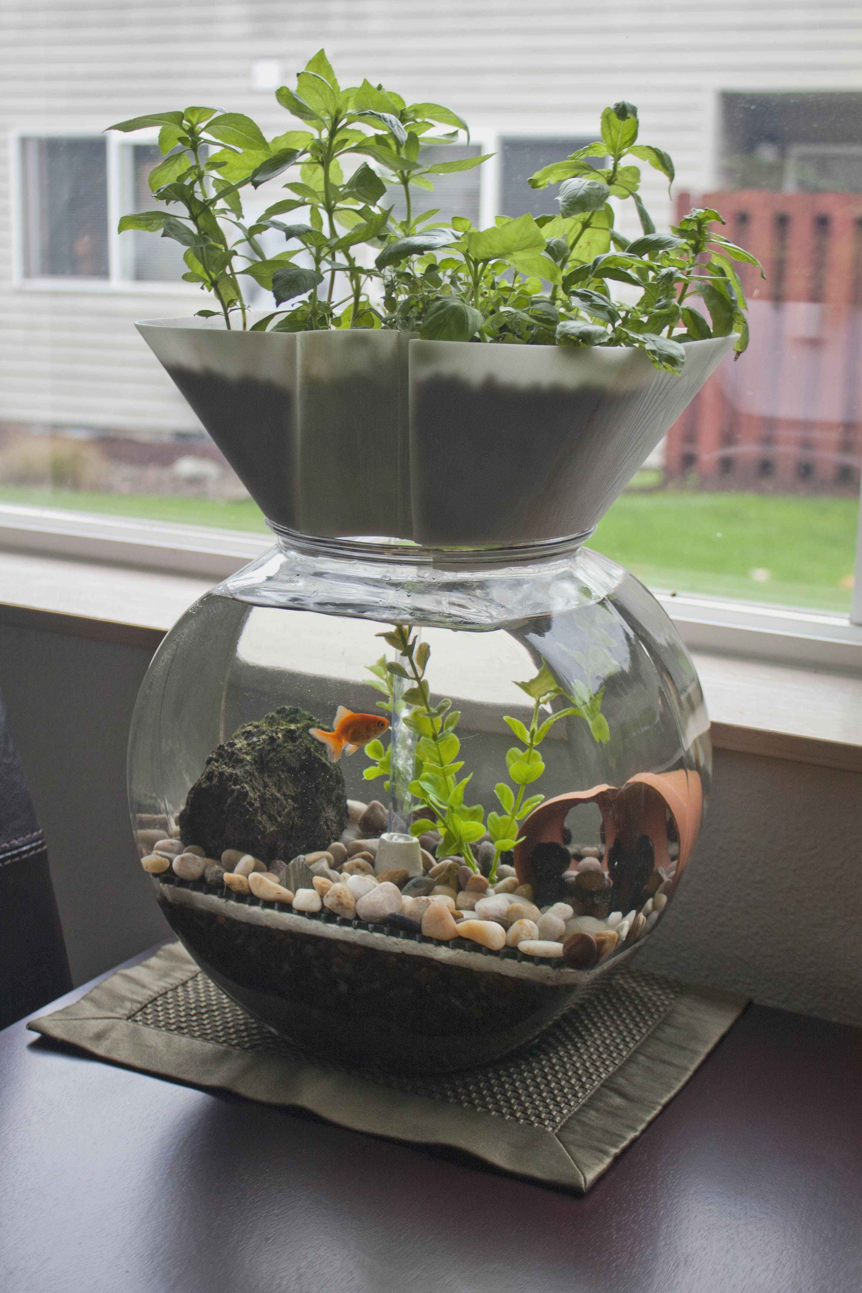 betta fish and plant vase of fresh best plants for betta plant directory within i want one of these the goldfish garden aquaponic aquarium