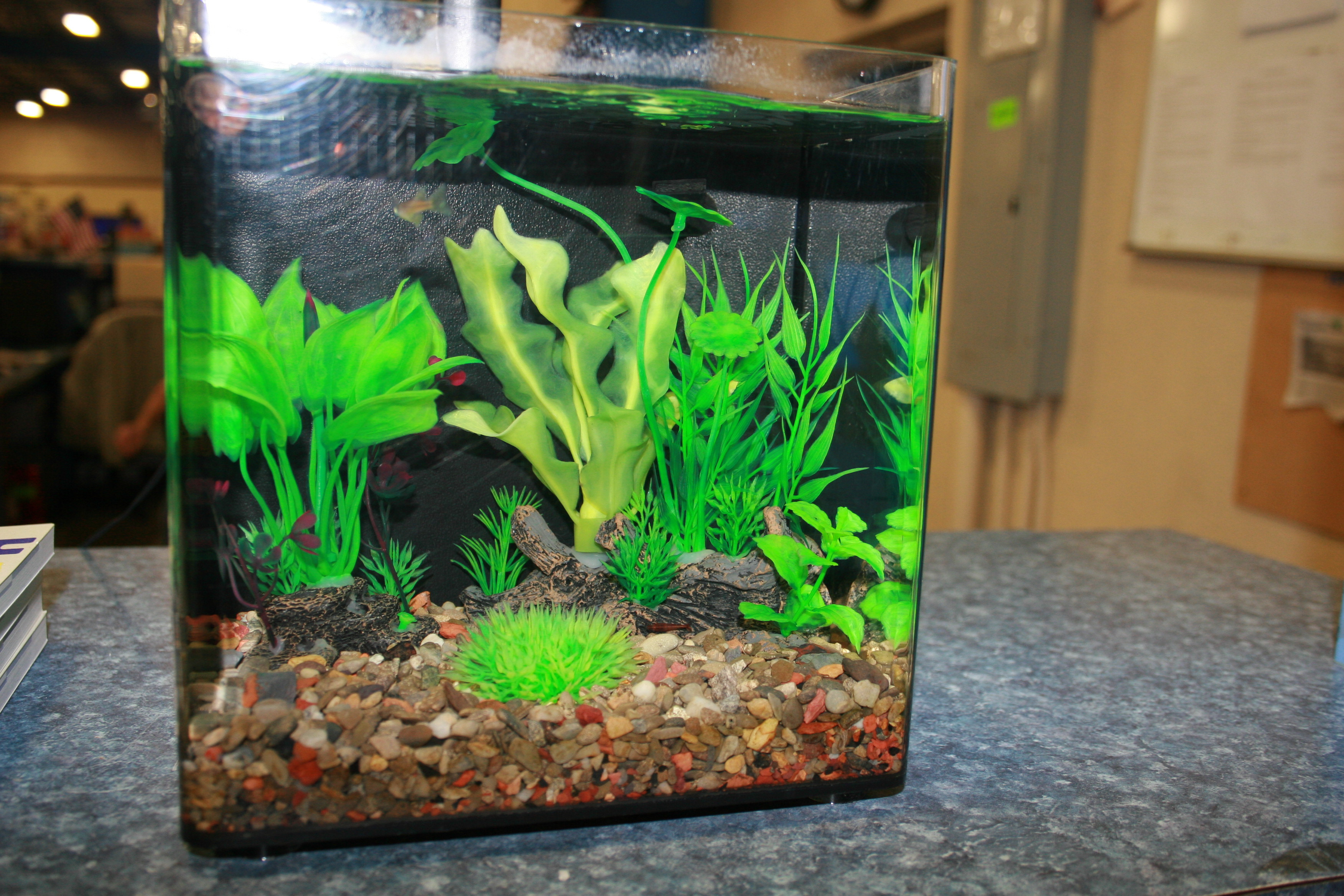 betta fish plant vase of aquarium gravel and substrate vs bare bottom tanks pros and cons regarding img 4312