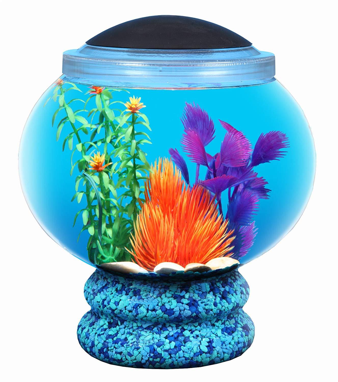 betta fish vase of api betta deco view aquarium kit 18 adult webcam jobs throughout amazon com koller products bettatank 1 6 gallon fish bowl with led lighting