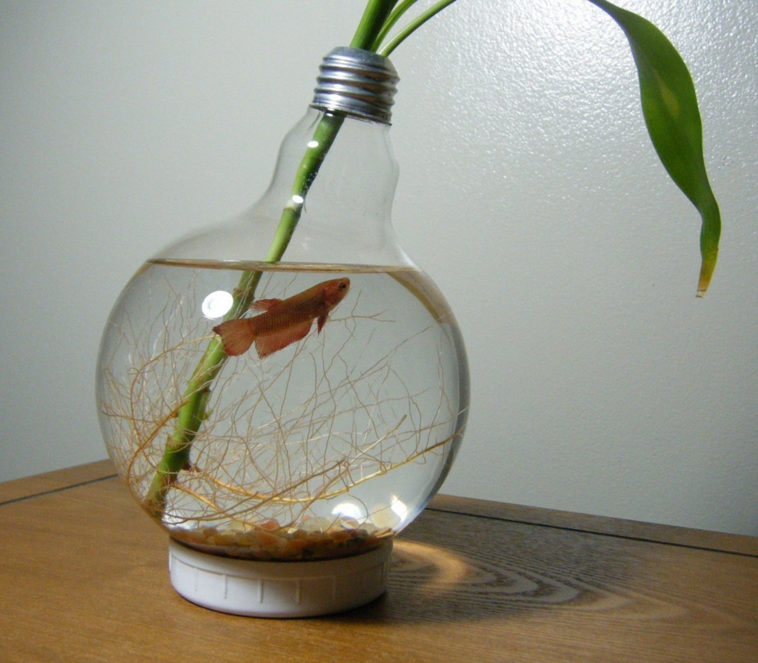 betta fish vase of old bulbs are useless a¹€a¸¥a¸µa¹‰a¸¢a¸‡a¸›a¸¥a¸² pinterest fish diy and light inside betta need 2 5 gallons a place to hide temperatures of 72 80 degrees fahrenheit and a filter this doesnt provide any of those