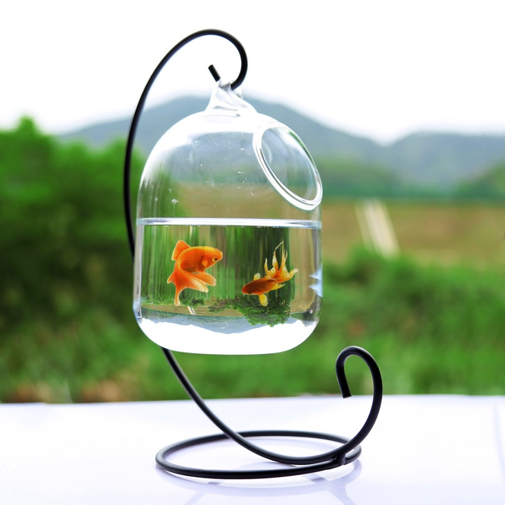 10 Spectacular Betta Fish Vase 2021 free download betta fish vase of petforu aquarium betta fish bowl aquarium incubator hatchery intended for clear petforu 15cm height hanging glass aquarium fish bowl fish tank flower plant vase with 23cm