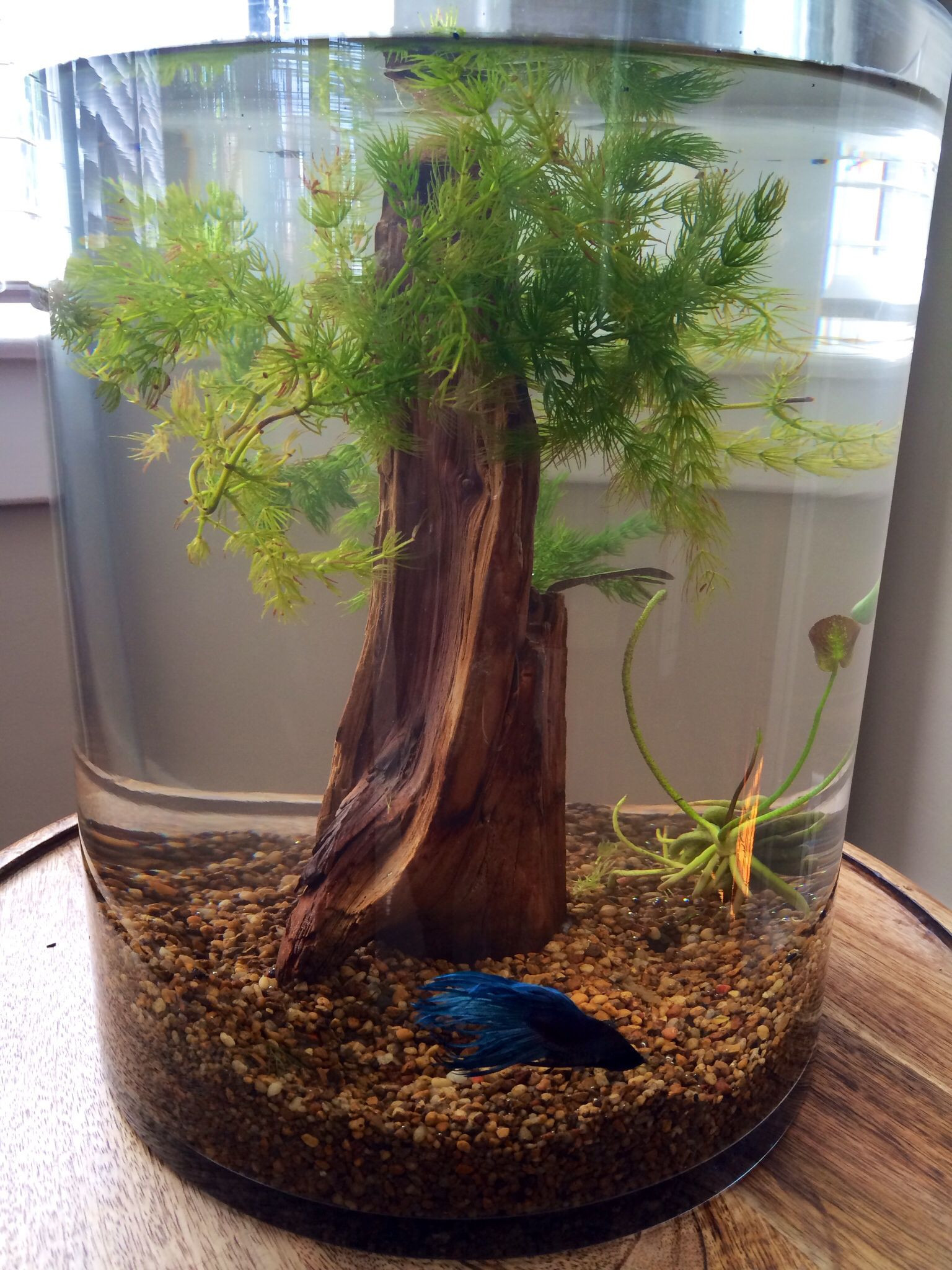 27 Stunning Betta Fish Vase with Bamboo