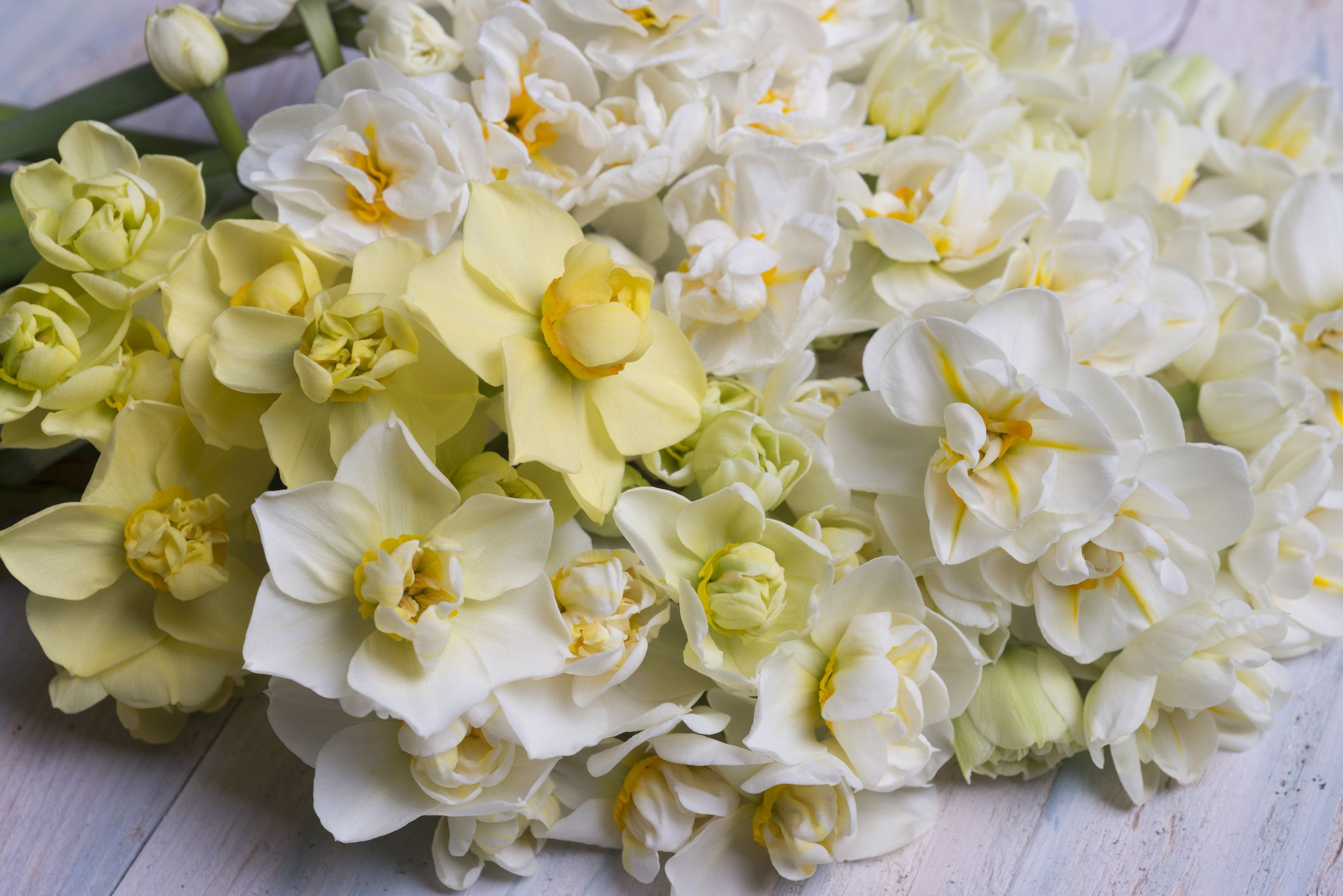 big vase floral arrangements of winter flowers for weddings inside daffodilbouquet 57d7229b5f9b589b0a59de12