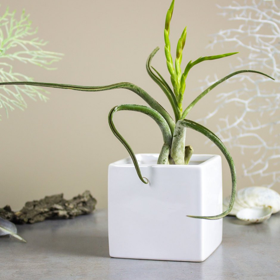 "black ceramic cube vase of square planter white cube ceramic vase gift mom geometric etsy with dŸ""Žzoom"