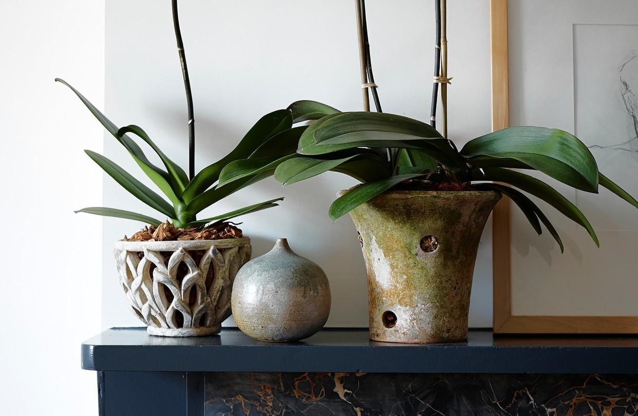 blown glass teardrop vases of the best orchid pots wsj in od ba981 orchid gr 20140212133619