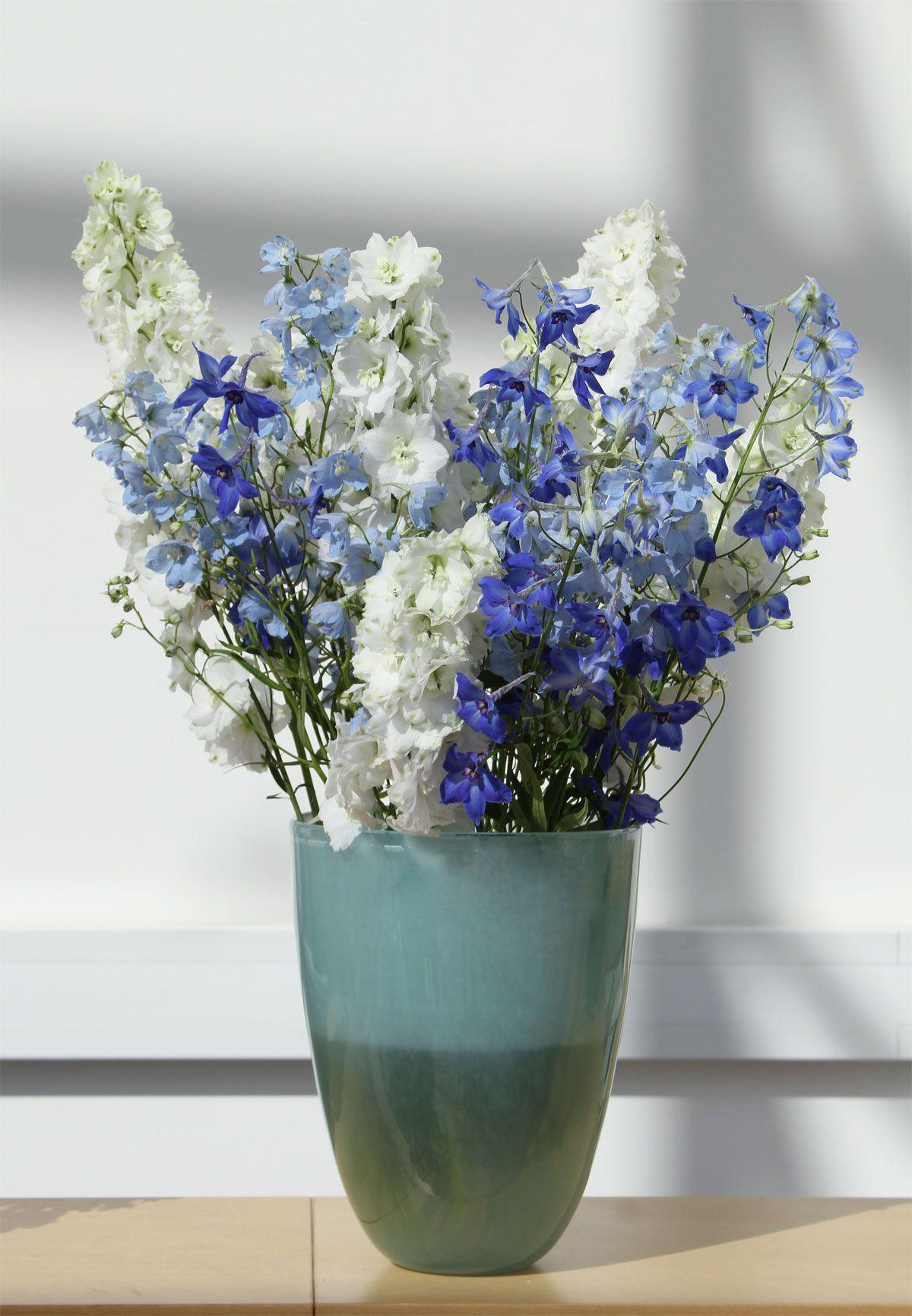 blue flowers in vase of rittersporn weiaŸe und blaue blumen white and blue flowers for rittersporn weiaŸe und blaue blumen white and blue flowers