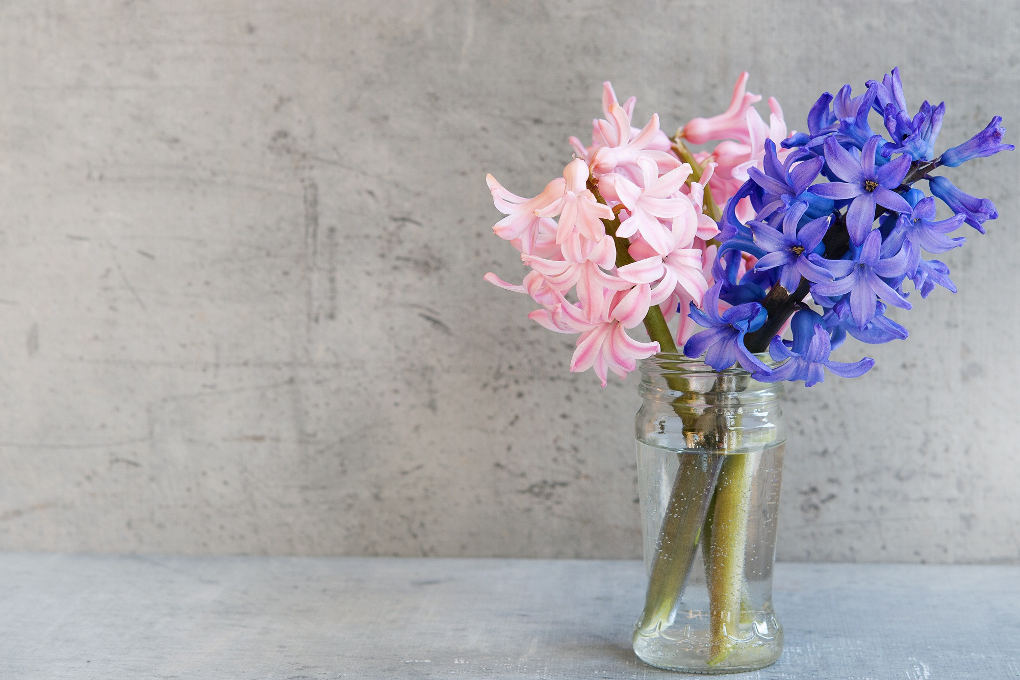 blue glass vase of free images glass vase blue pink close deco negative space with regard to free images glass vase blue pink close deco negative space art floristry hyacinth spring flowers text freedom flowering plant flower bouquet