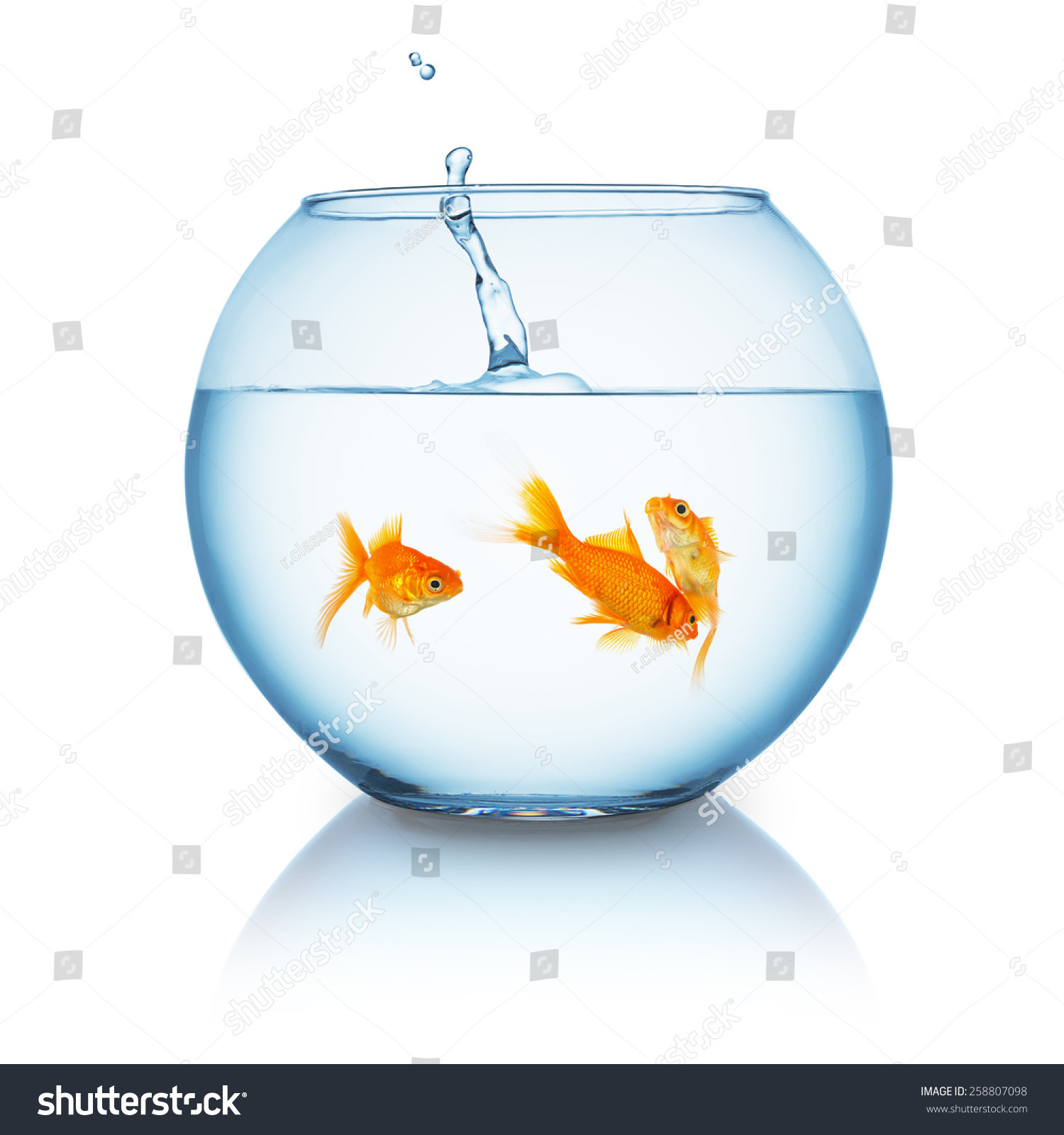 bubble fish bowl vase of tow goldfishes in a fishbowl isolated on white ez canvas throughout stock photo fishbowl with goldfishes and splash on white background 258807098