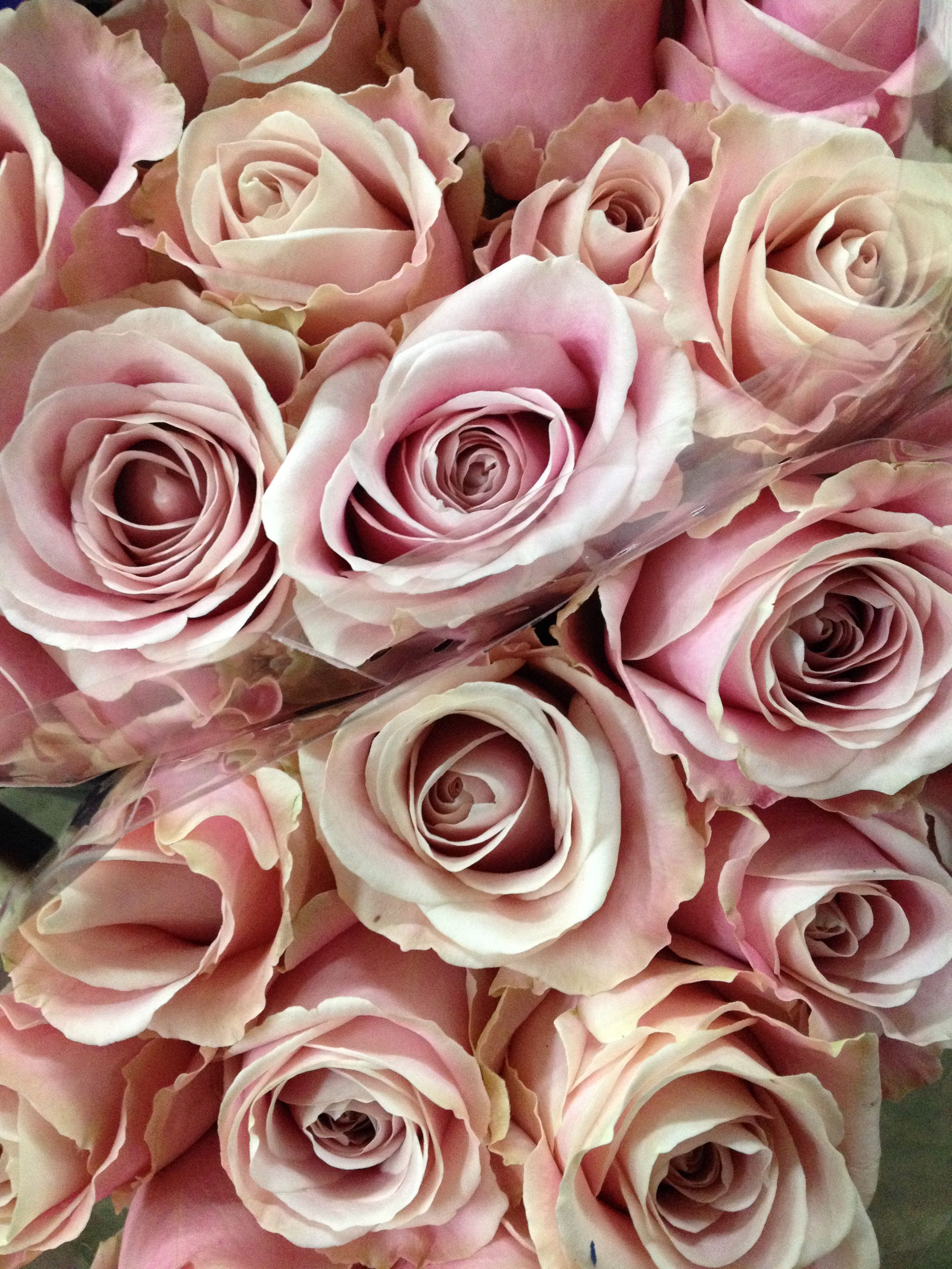 bubble vase bulk of pink avalanche rose sold in bunches of 20 stems from the regarding sold in bunches of 20 stems from the flowermonger the wholesale floral home delivery service