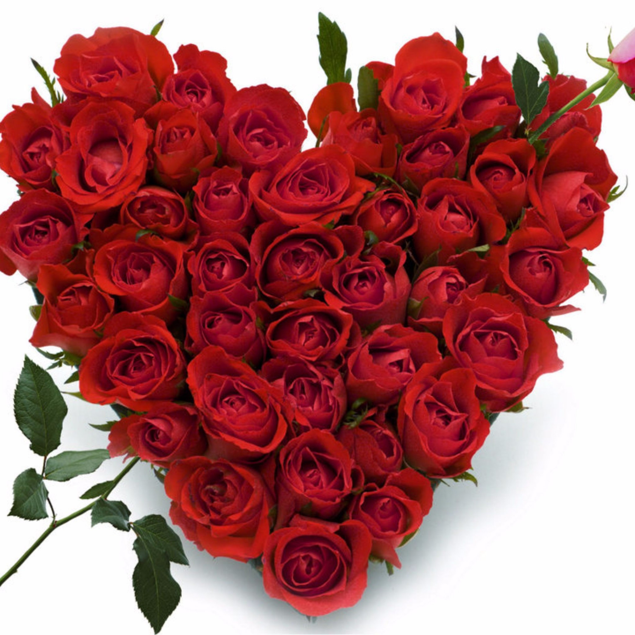 buy red glass vase of send flowers to patna flowers delivery online in patna od for heart of 50 roses