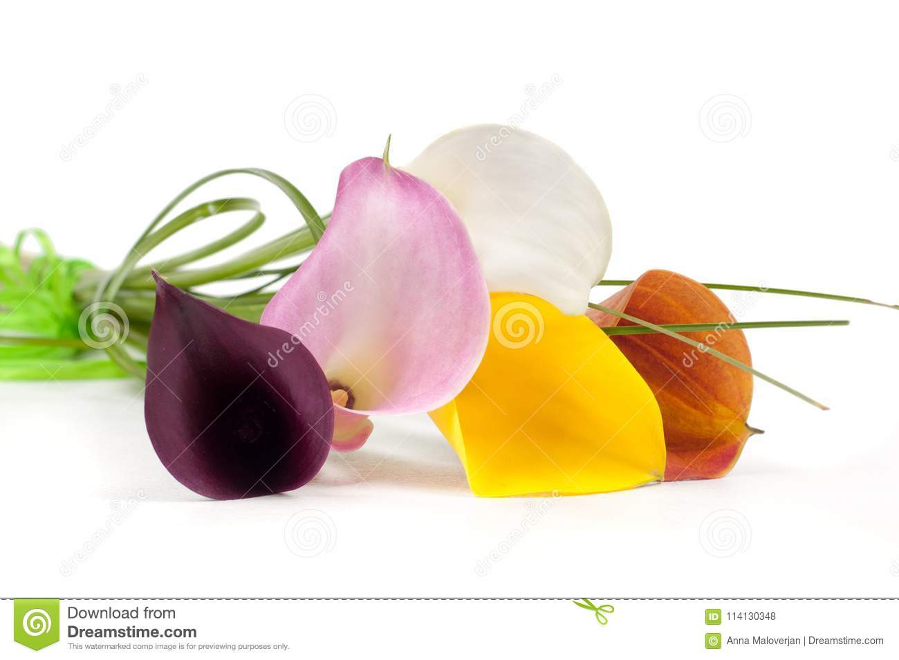 calla lily in vase photo of calla lilies flowers stock photo image of closeup delicate 114130348 with calla lilies flowers