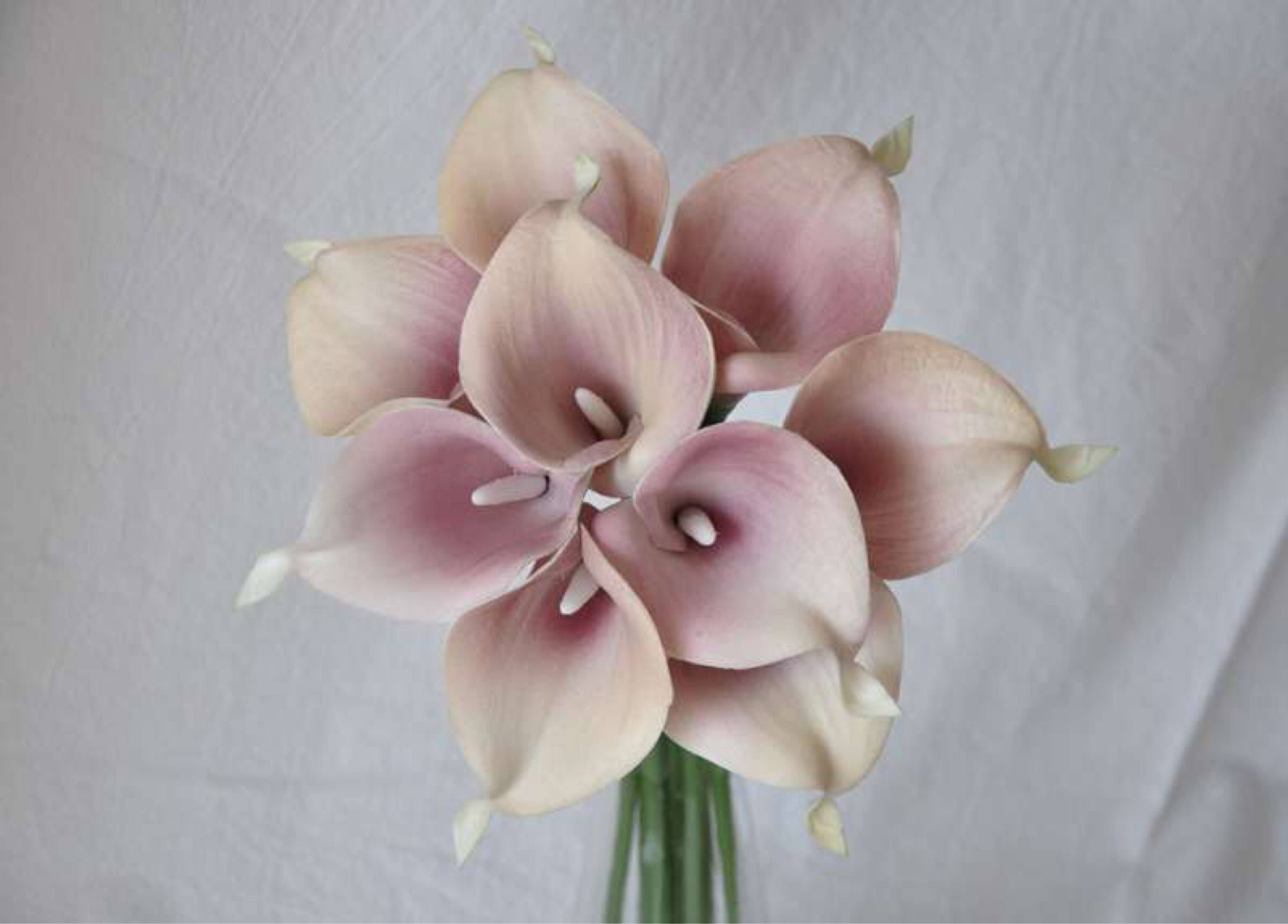 """calla lily in water vase of 9pcs real touch dusty pink picasso calla lilieswedding bridal in dŸ""""Žzoom"""