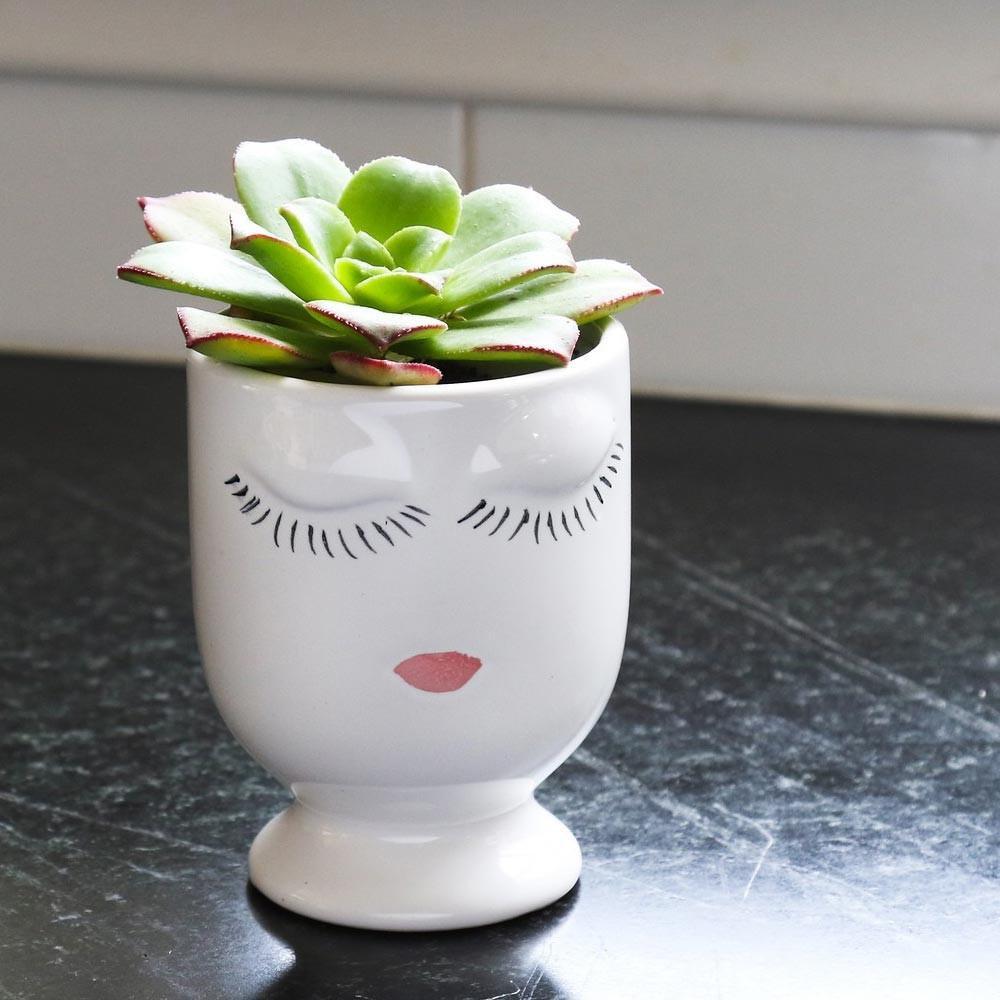 capiz shell vase of succulent gift aeonium kiwi selfie vase succulents plants gift in succulent celfie vase small aeonium kiwi free shipping