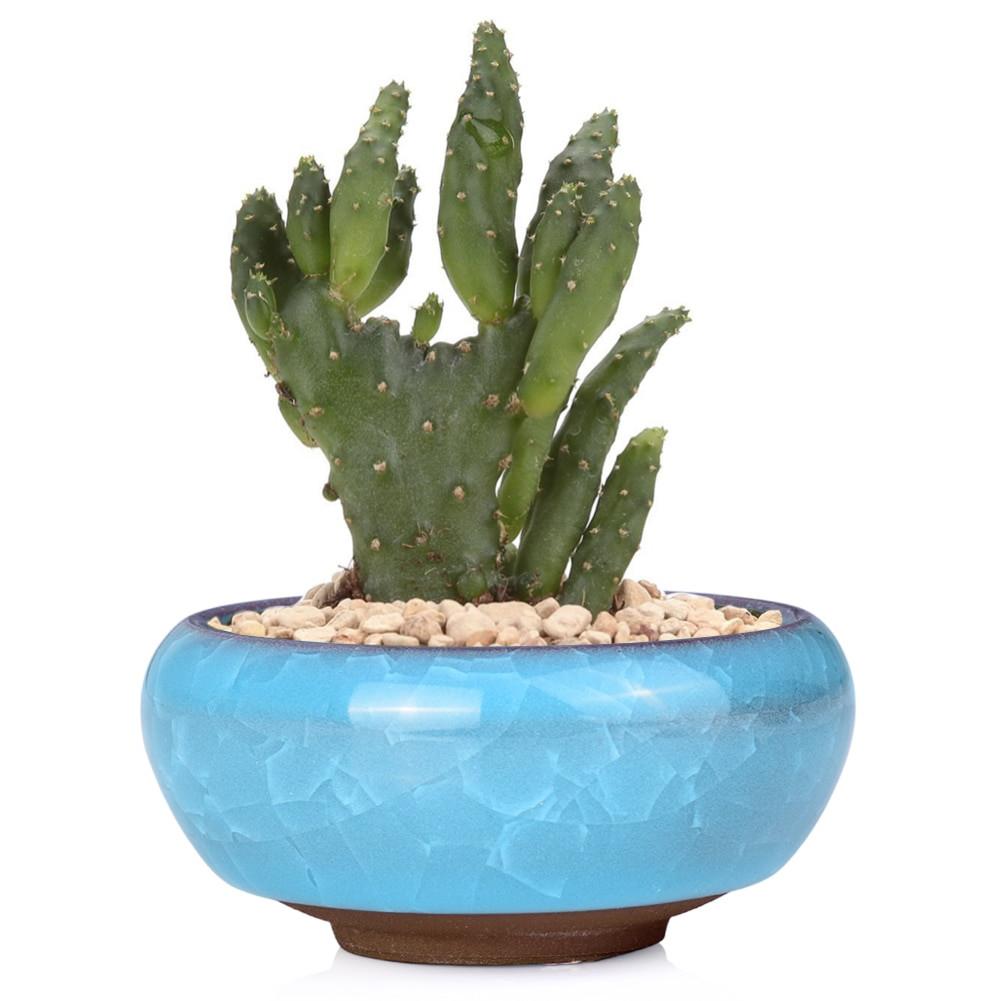 ceramic cactus vase of wituse 6pcs for home desk mini glazed ceramic succulent planter in aeproduct getsubject