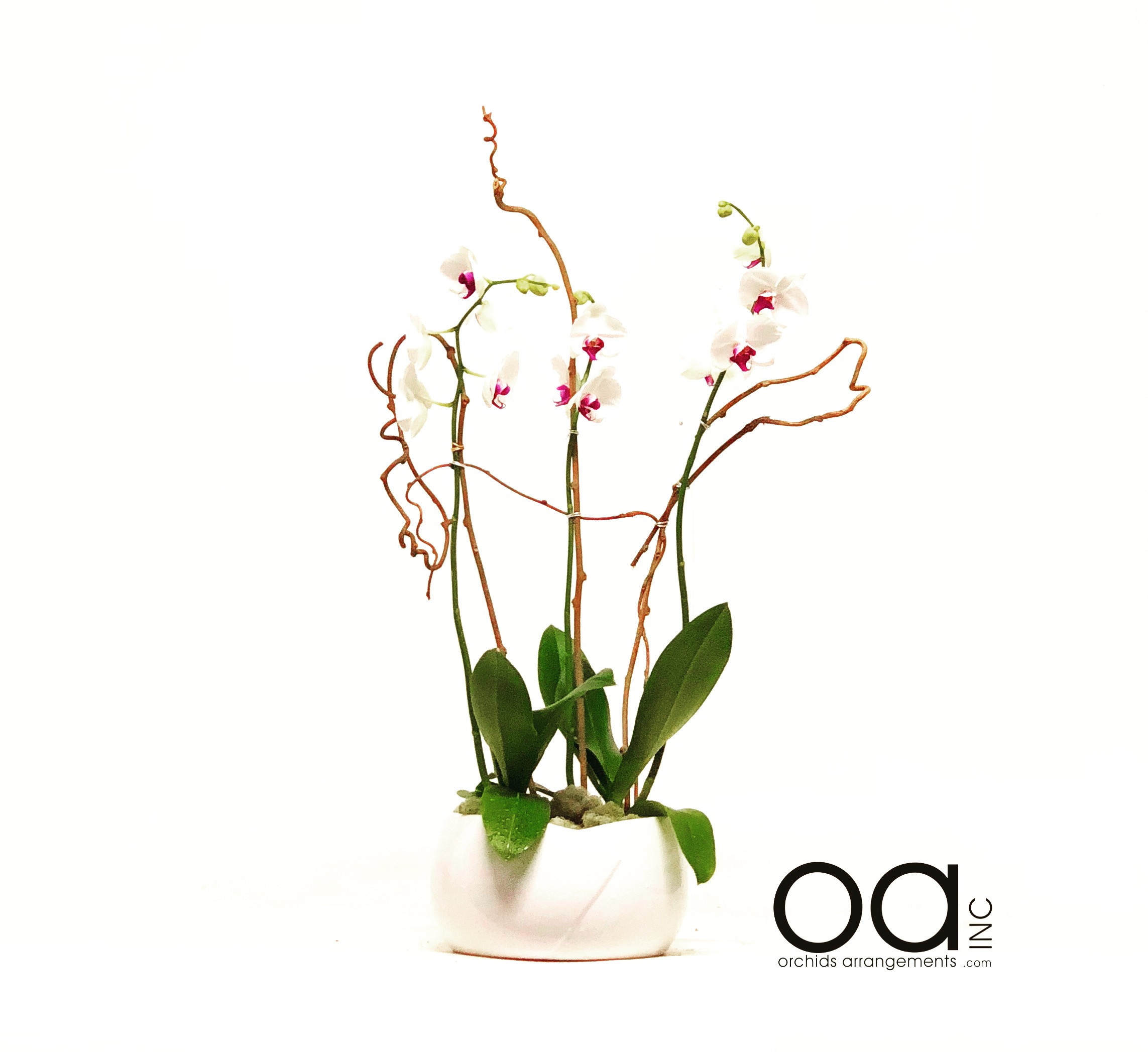 29 Best Cheap Flowers with Free Vase 2021 free download cheap flowers with free vase of send 3 orchid arrangement bella vase in miami fl orchids in send 3 orchid arrangement bella vase