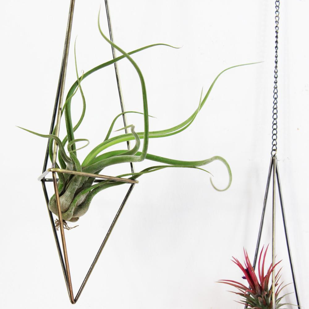 chinese plant vase of 2018 ir plant holder freestanding hanging planters geometric himmeli with regard to 2018 ir plant holder freestanding hanging planters geometric himmeli swing wrought iron tillandsia air plants holder triangular shaped metal r