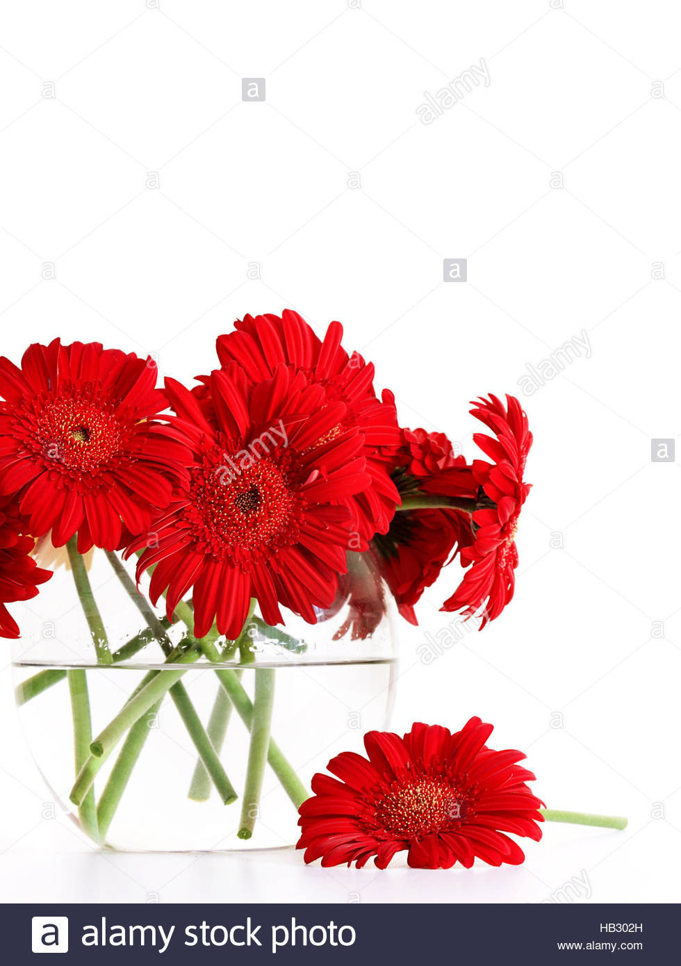 clear heart shaped vase of red glass vase photos single red glass vase isolated stock s intended for red glass vase pics closeup od red gerber daisies in glass vase stock of red glass