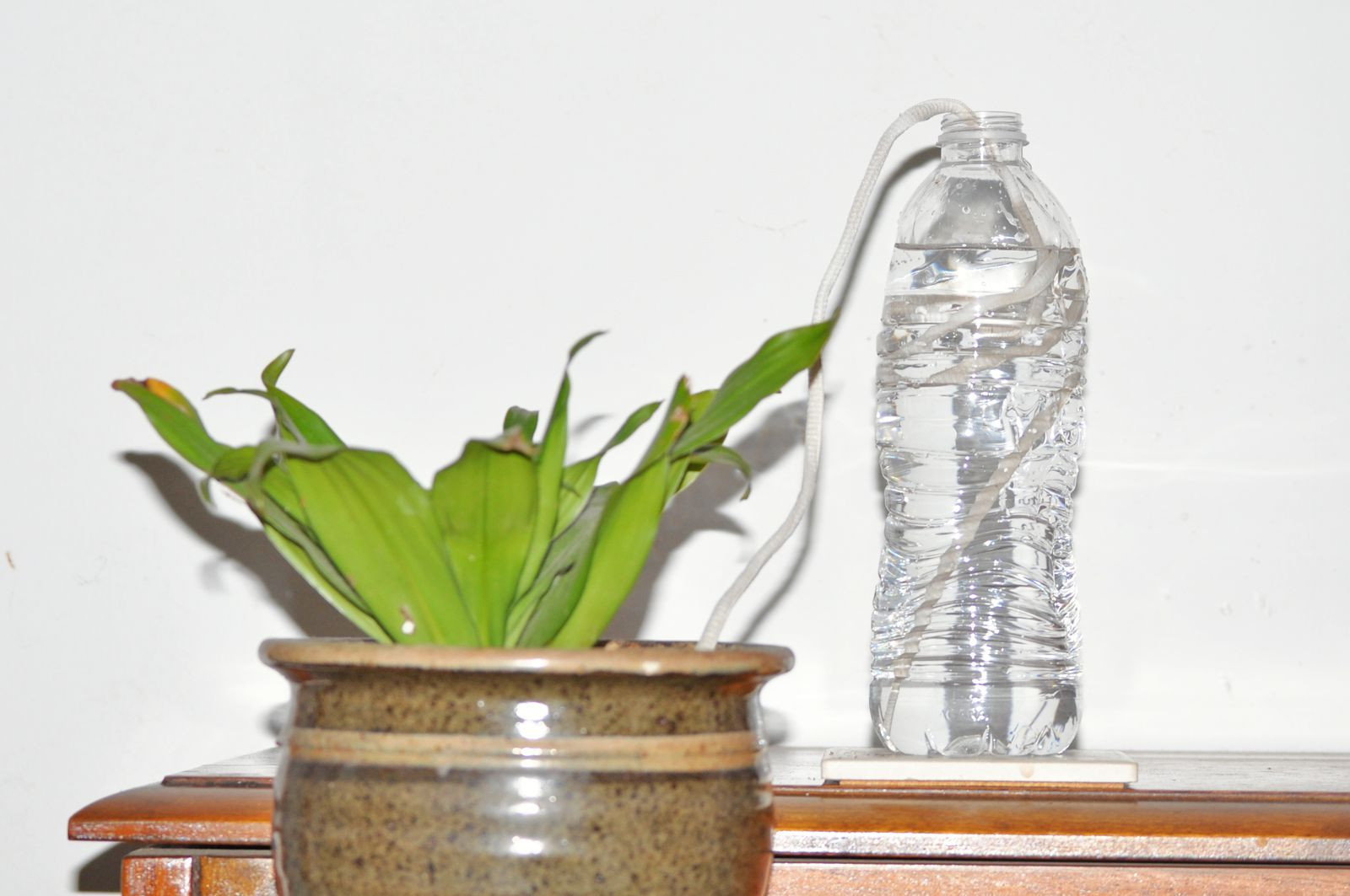 13 Fabulous Cotton Stems In Glass Vase 2021 free download cotton stems in glass vase of keeping your plants alive while youre away in self waterer 593ee3805f9b58d58a734526