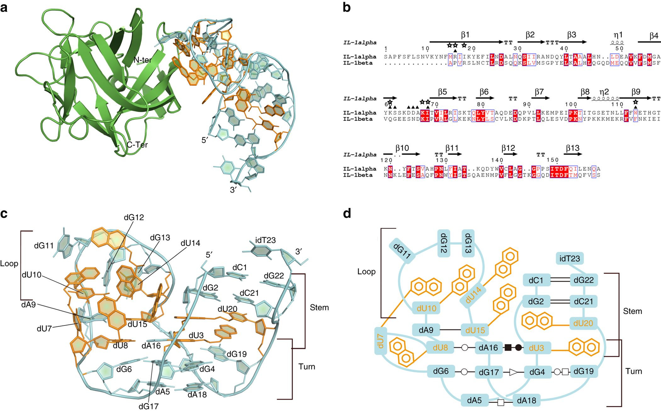 cyan design bora vase of structural basis for il 1i± recognition by a modified dna aptamer in structural basis for il 1i± recognition by a modified dna aptamer that specifically inhibits il 1i± signaling nature communications