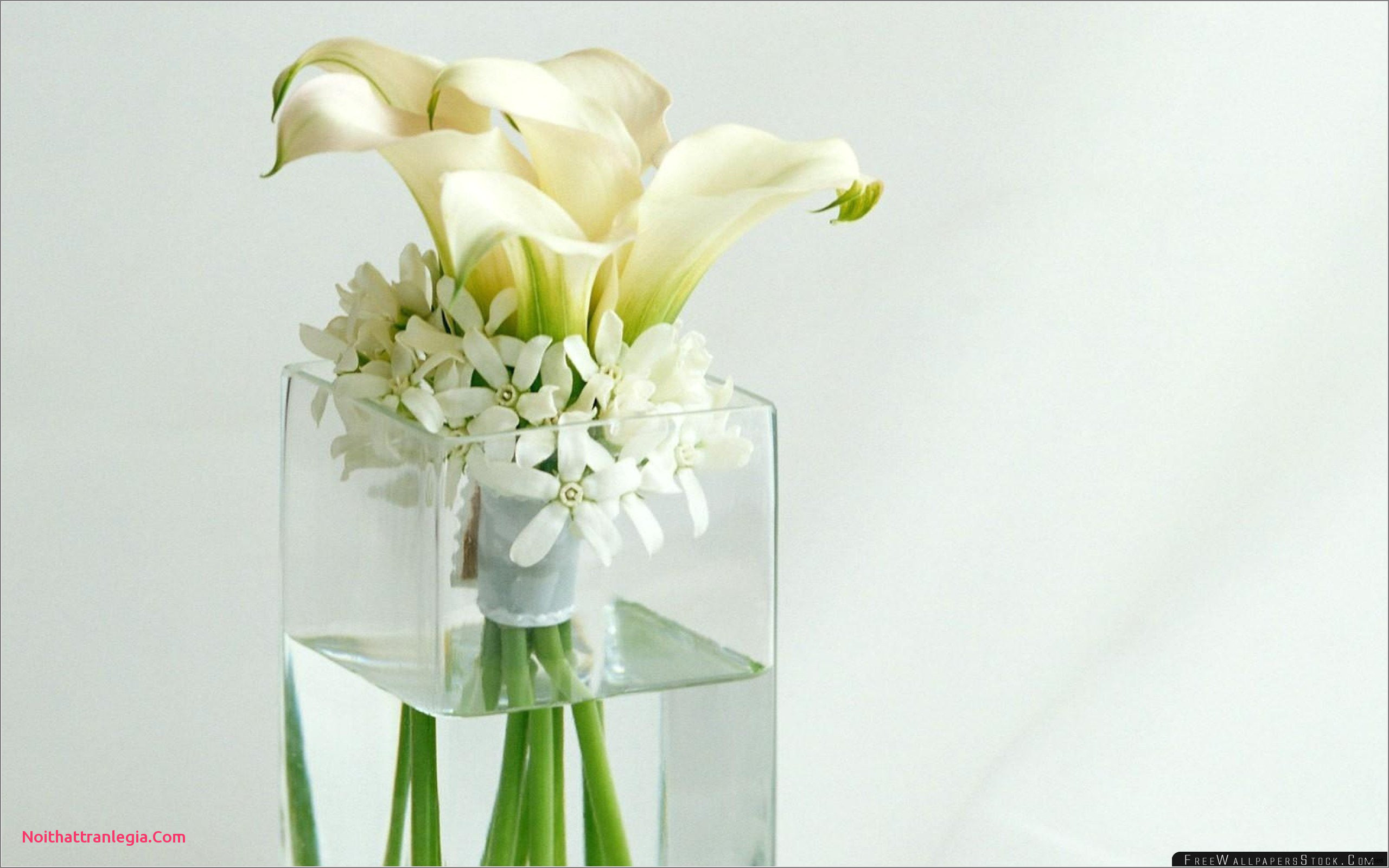 19 Awesome Daisies In A Vase