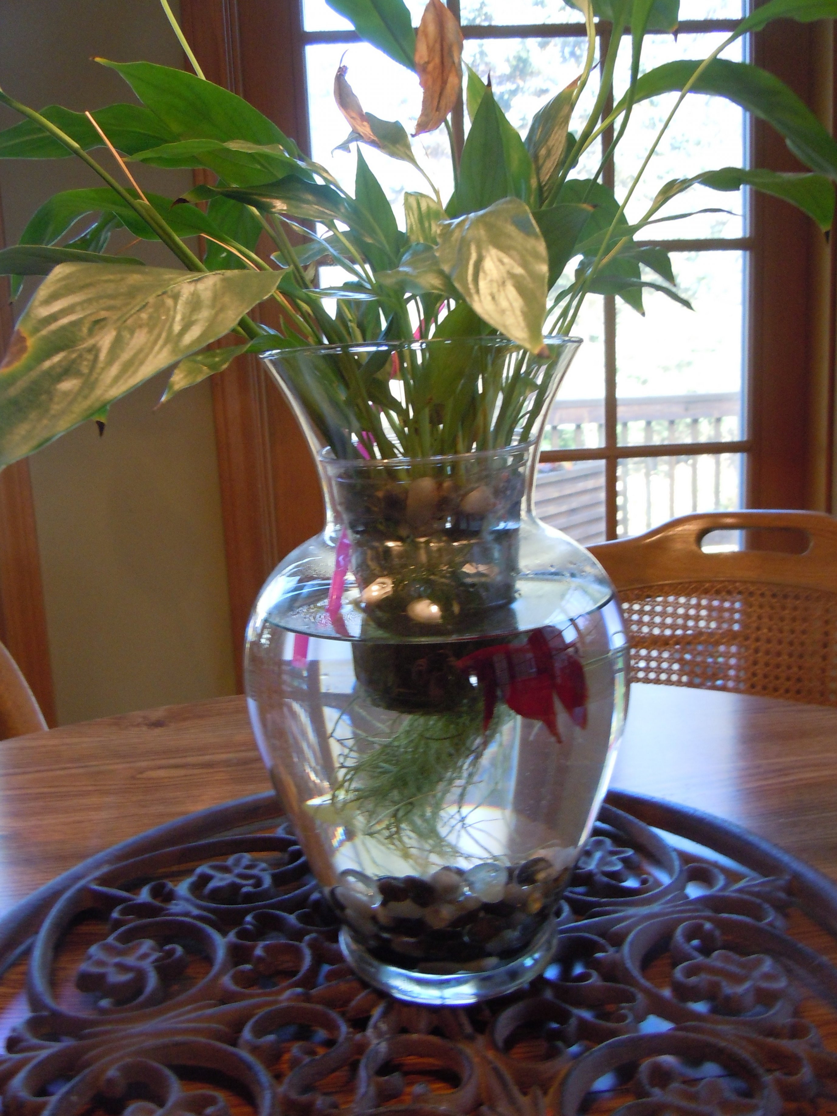 decorative fish bowl vases of plants in glass bowl econhomes com with regard to glass bowl fish tank 50 water nature plant flower glass
