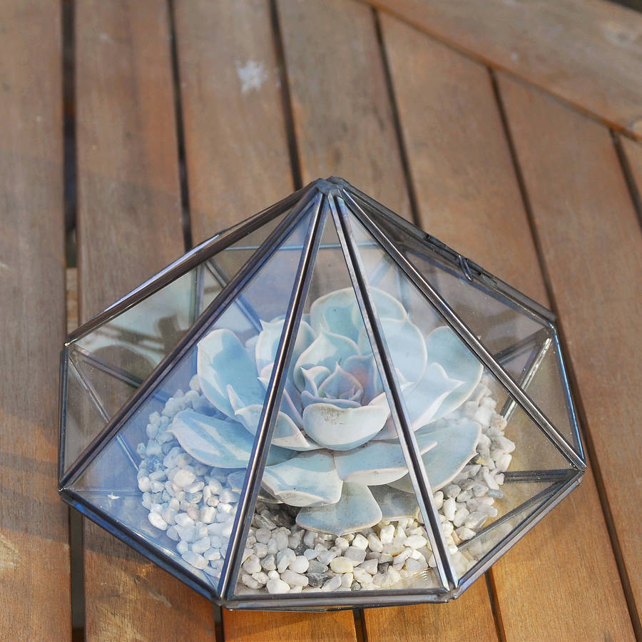 22 attractive Diamond Shaped Vase 2021 free download diamond shaped vase of large diamond glass succulent terrarium by dingading terrariums throughout large diamond glass succulent terrarium
