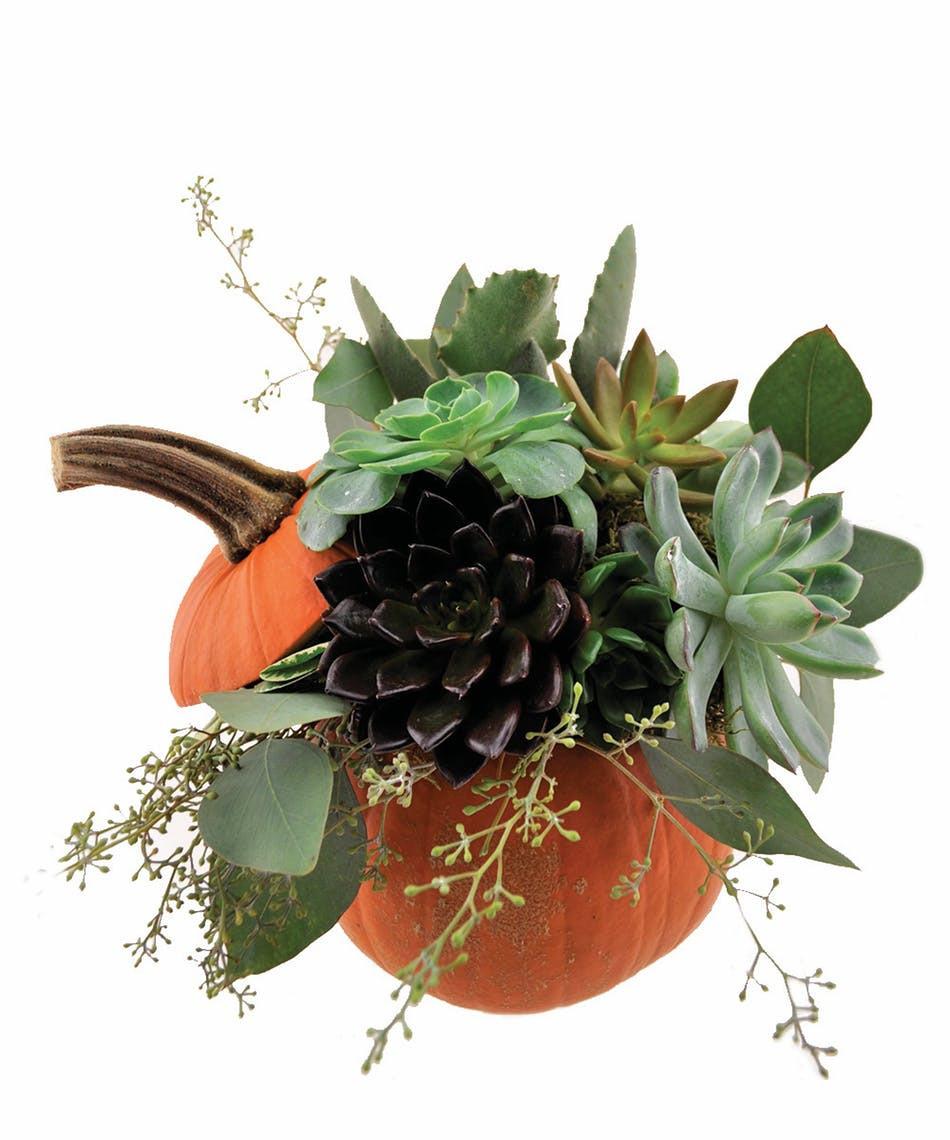 empty vase boerne of pumpkin succulent san antonio florist flower delivery the with pumpkin succulent san antonio florist flower delivery the flower bucket
