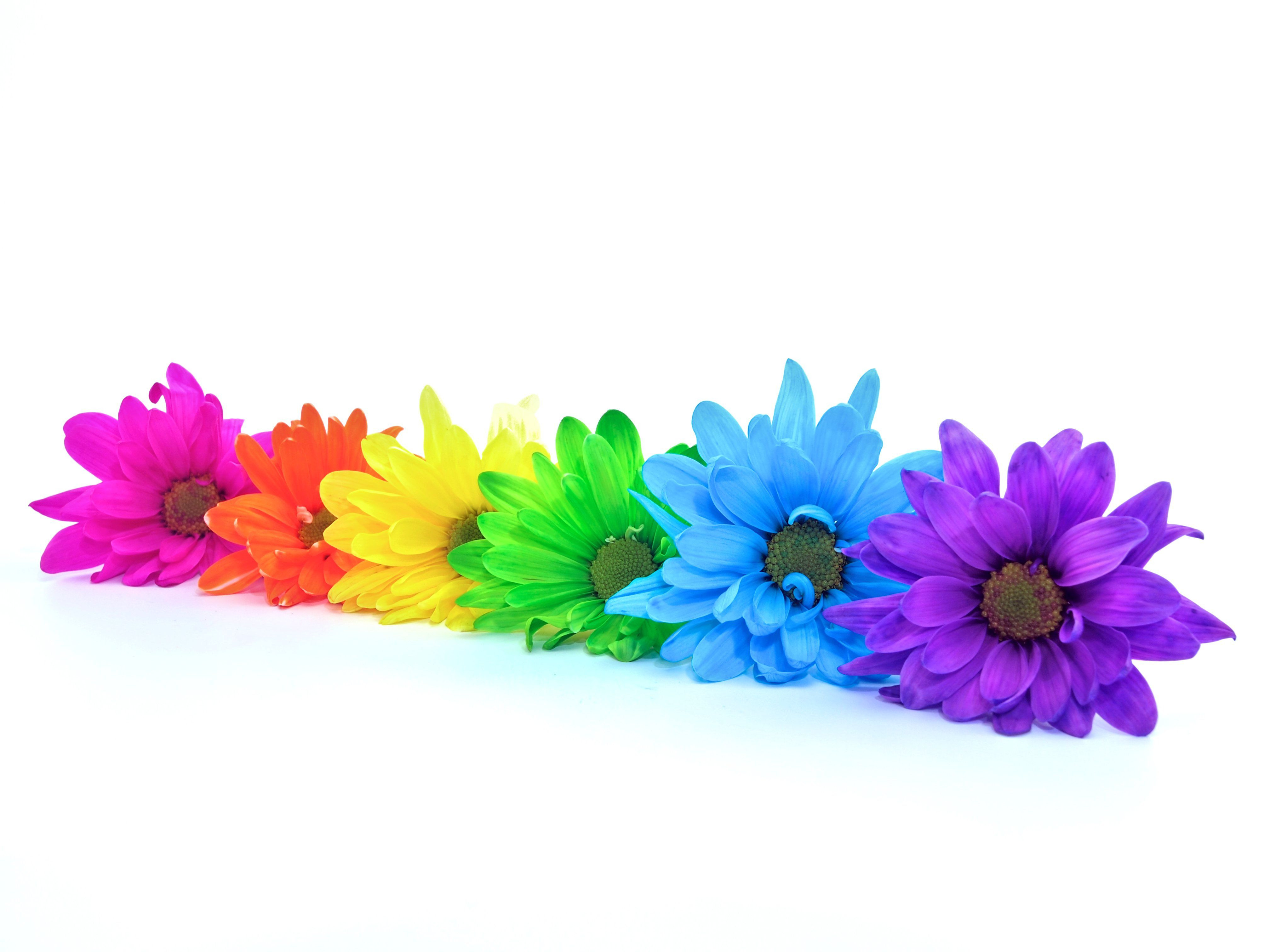 fake flowers in vase with fake water of how to make colored flowers in rainbow daisies 487382881 57f11cda5f9b586c35fae74e