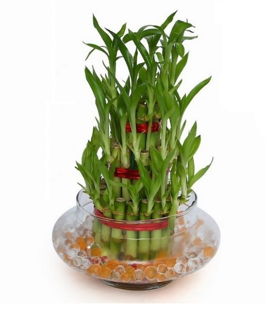 feng shui wealth vase kit of green plant indoor 3 layer lucky bamboo plant buy green plant in green plant indoor 3 layer lucky bamboo plant