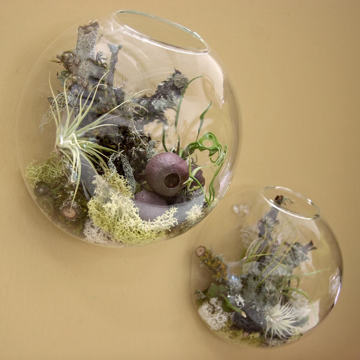 fish and plants in a vase of wall bubble terrariums glass wall vase for flowers indoor plants with regard to 3pcs set air plant wall glass terrariumwall bubble terrariumwall plantersfighting fish tank for wall decorhome decorationgreen gifts