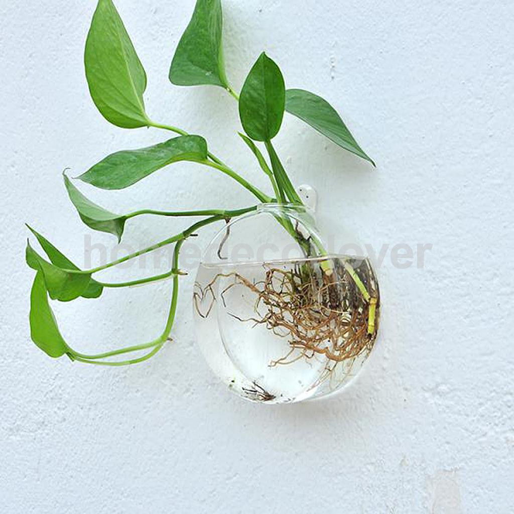 Flat Fish Bowl Vase Of Wall Hanging Plant Flower Hydroponic Flat Ball Glass Vase Terrarium for Aeproduct Getsubject