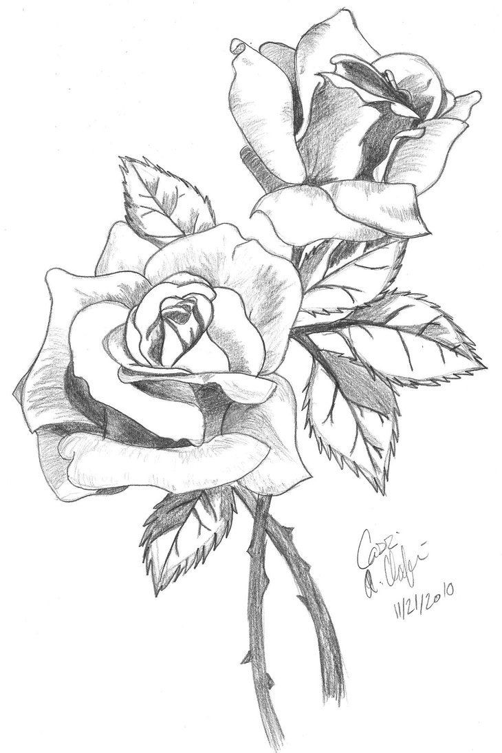 Flower Vase From Beauty and the Beast Of Rose Flower Drawing Step Step at Getdrawings Com Free for Personal In 730x1094 Drawn Rose Pencil for Kid