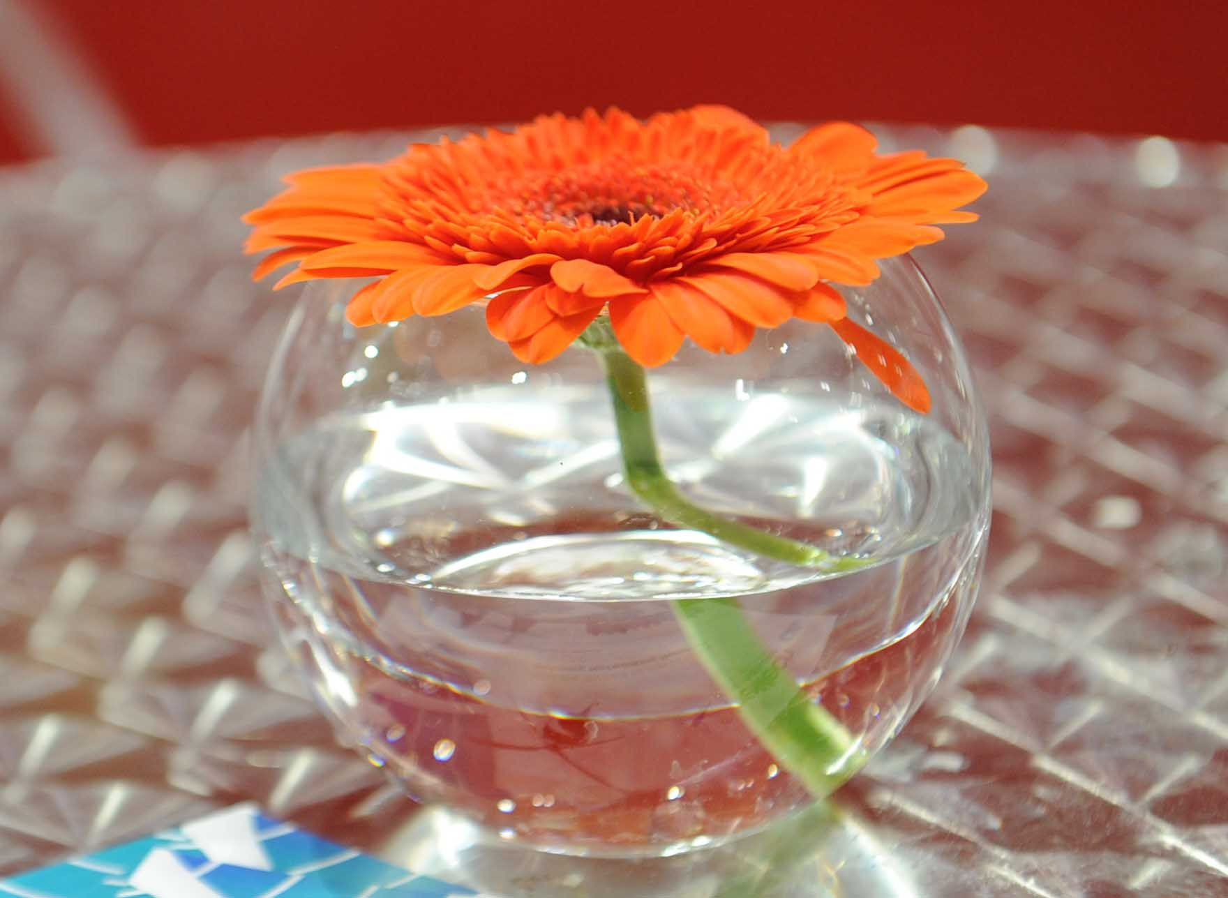 french country decor vases of orange glass vase pics 47 od single orange gerbera in gfb within orange glass vase pics 47 od single orange gerbera in gfb celebraciones of orange glass vase
