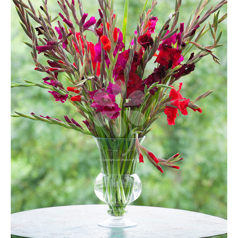 gladiolus vase for sale of nero vase in 1500x1500 fit 450034 9