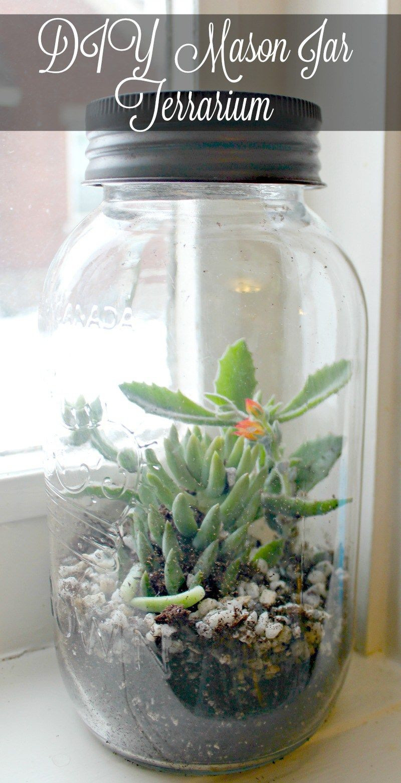 Glass Vase Terrarium Of Diy Mason Jar Terrarium Mason Jar Terrarium Terraria and Jar with Diy Mason Jar Terrarium Simple Idea to Add A Little Bit Of Life to Your Indoor Garden 12monthsofdiy Januarymasonjars