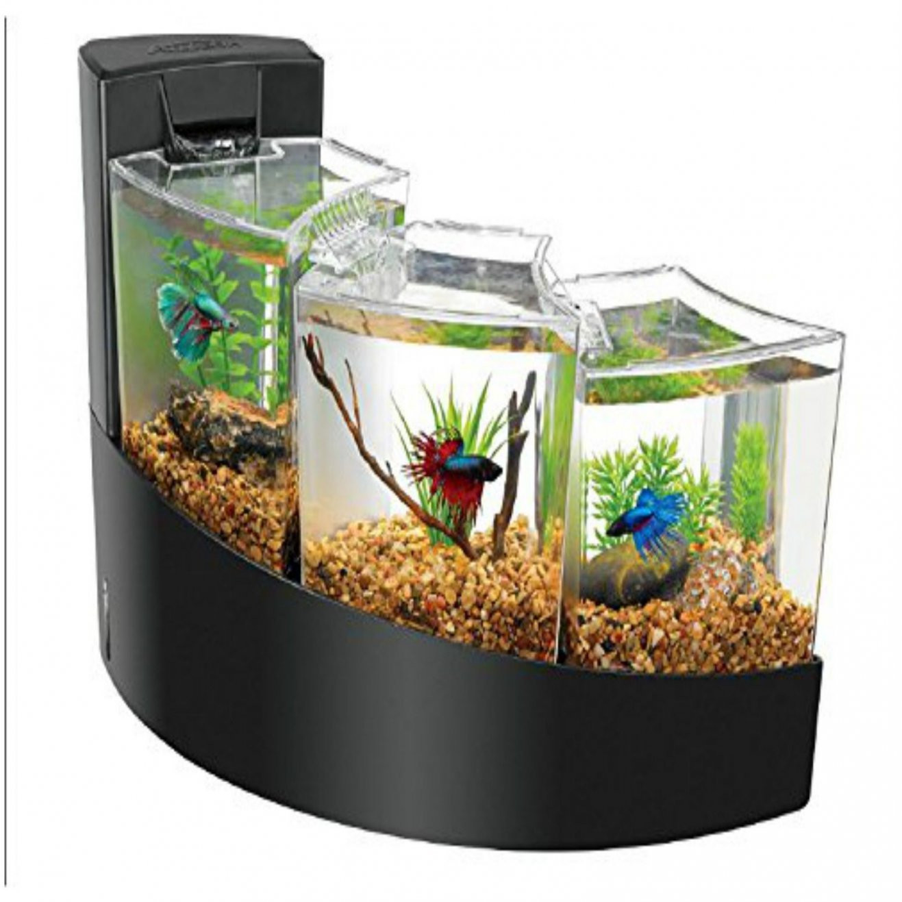 glass vases for betta fish of glass bowl fish tank amazing fish tank home aquarium pinterest throughout glass bowl fish tank amazing fish tank home aquarium pinterest