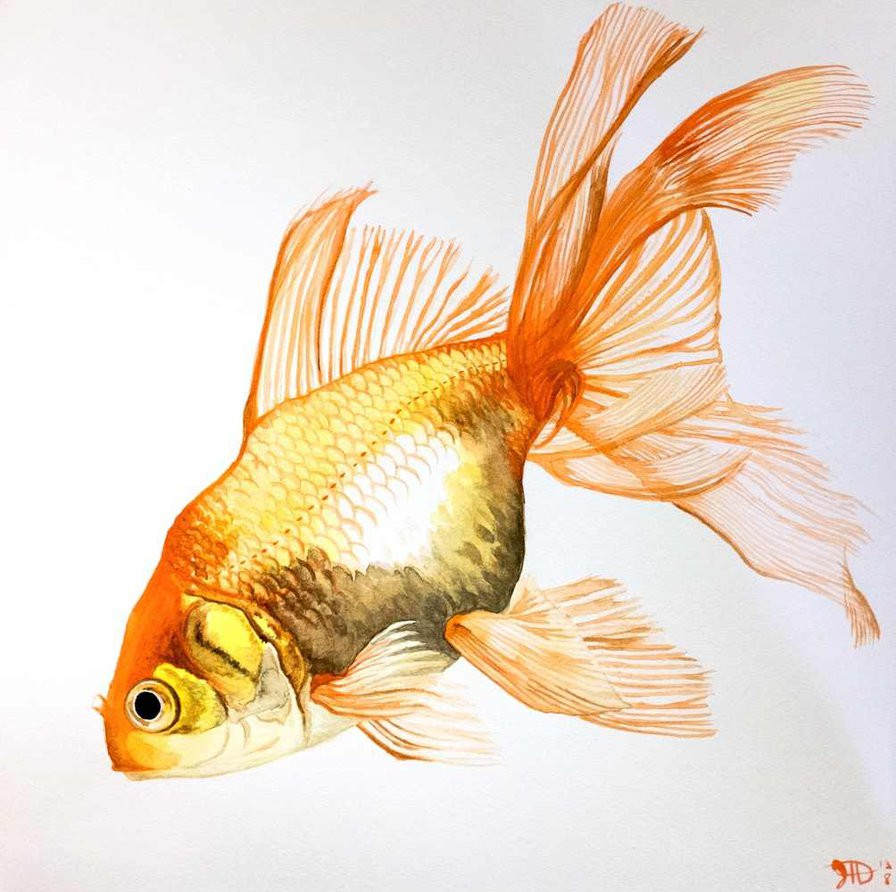goldfish vase of gold fish paintings for goldfish fancy fins water by goldfish account on deviant
