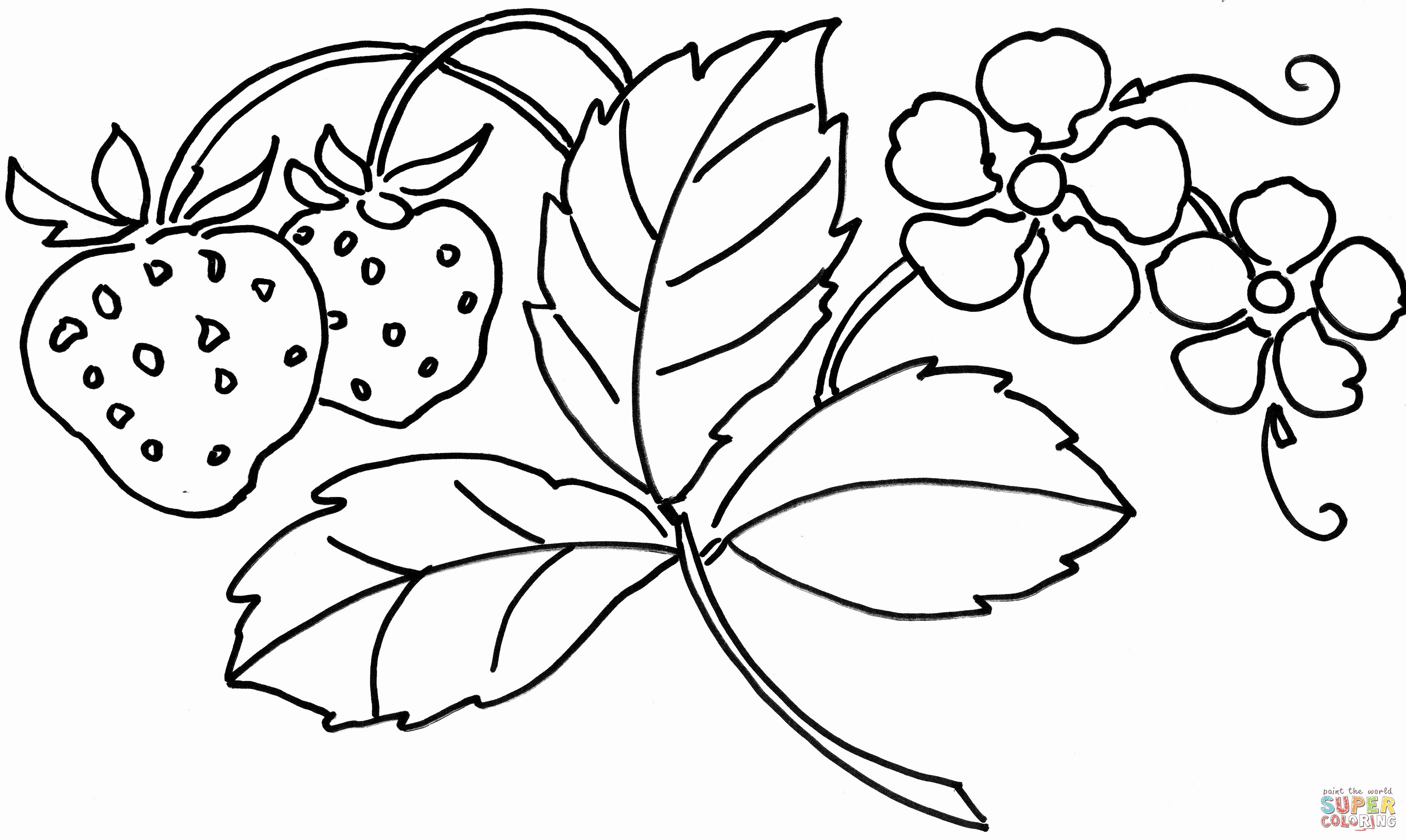 green flower vase of new coloring pages flowers awesome vases flower vase coloring page for new coloring pages flowers awesome vases flower vase coloring page pages