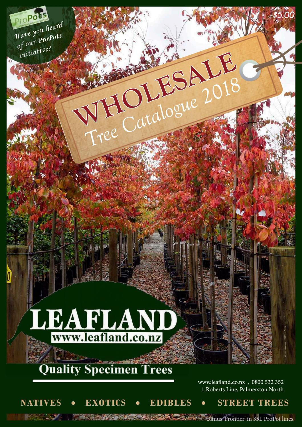 green vase zelkova for sale of leafland 2018 catalogue by leafland quality specimen trees issuu for page 1