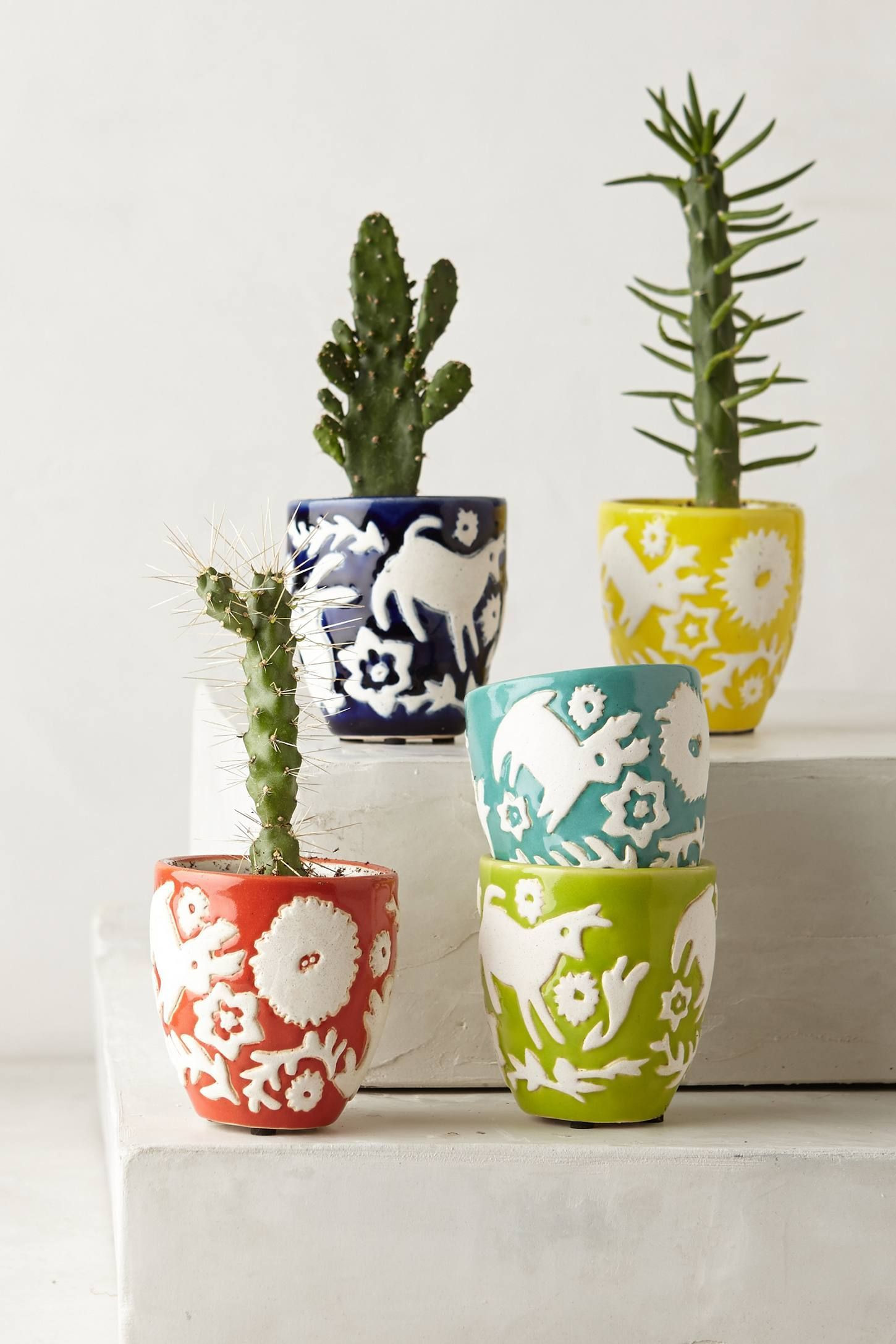 hall pottery vase of 25 air plant vase the weekly world regarding mini concha garden pots anthropologie